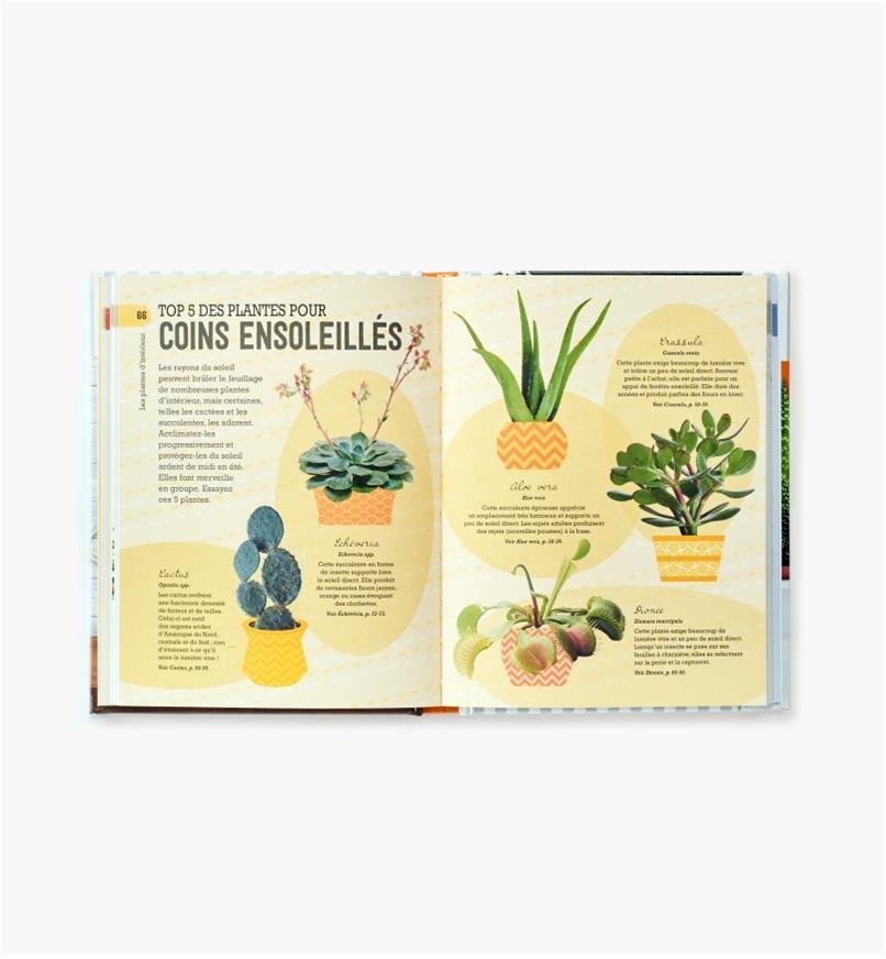 LD838 - Comment ne pas assassiner vos plantes d'intérieur