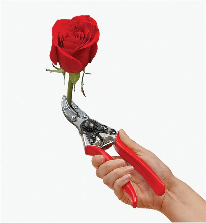 Felco #100 Cut-&-Hold Pruner holding a rose by the stem