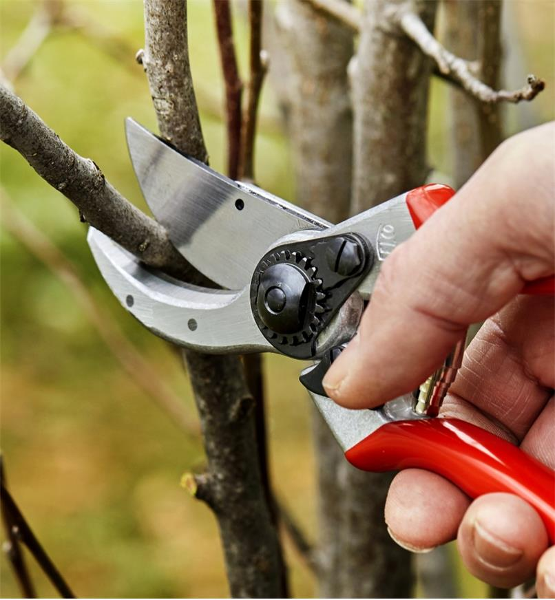 Using a Felco #2 pruner to trim a branch