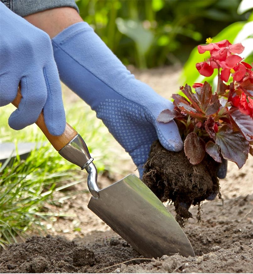 Transplanting a plant into a garden using a Lee Valley trowel