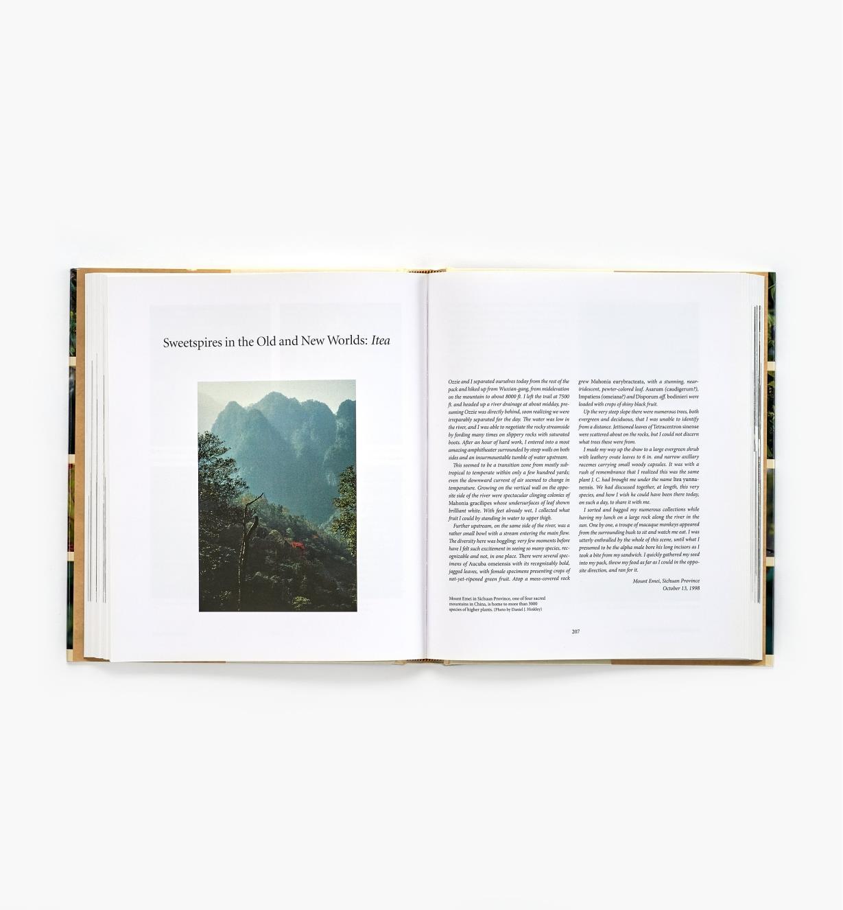 99W8293 - The Explorer's Garden