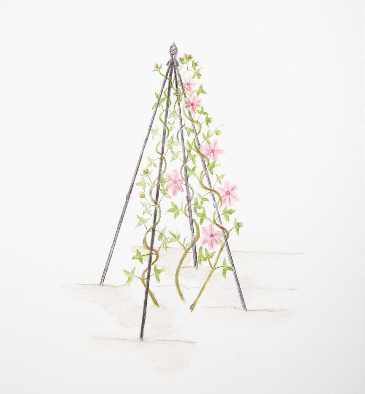 Illustration montrant une plante grimpante soutenue par le tuteur pyramidal