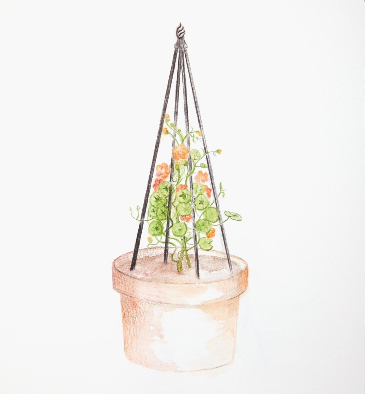 Illustration montrant le tuteur pyramidal supportant une plante grimpante dans un grand pot