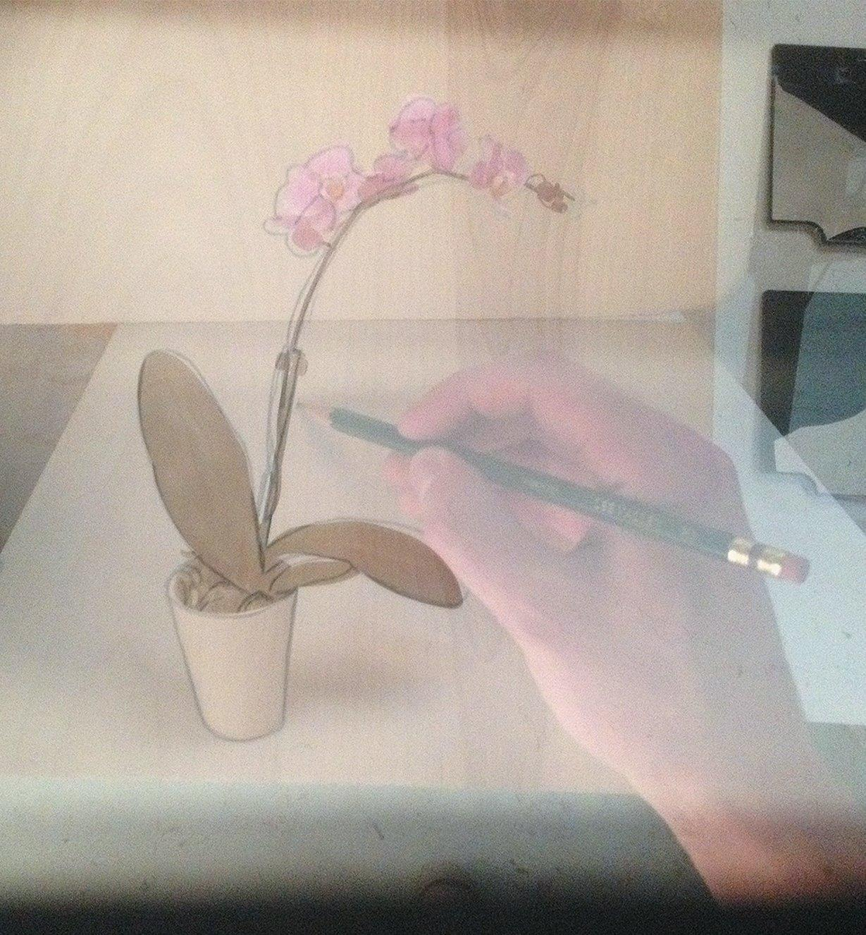 Tracing the outline of a flower as seen through the viewfinder