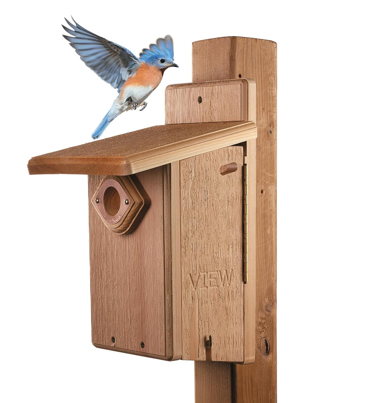 A bird landing on a Cedar Bluebird House