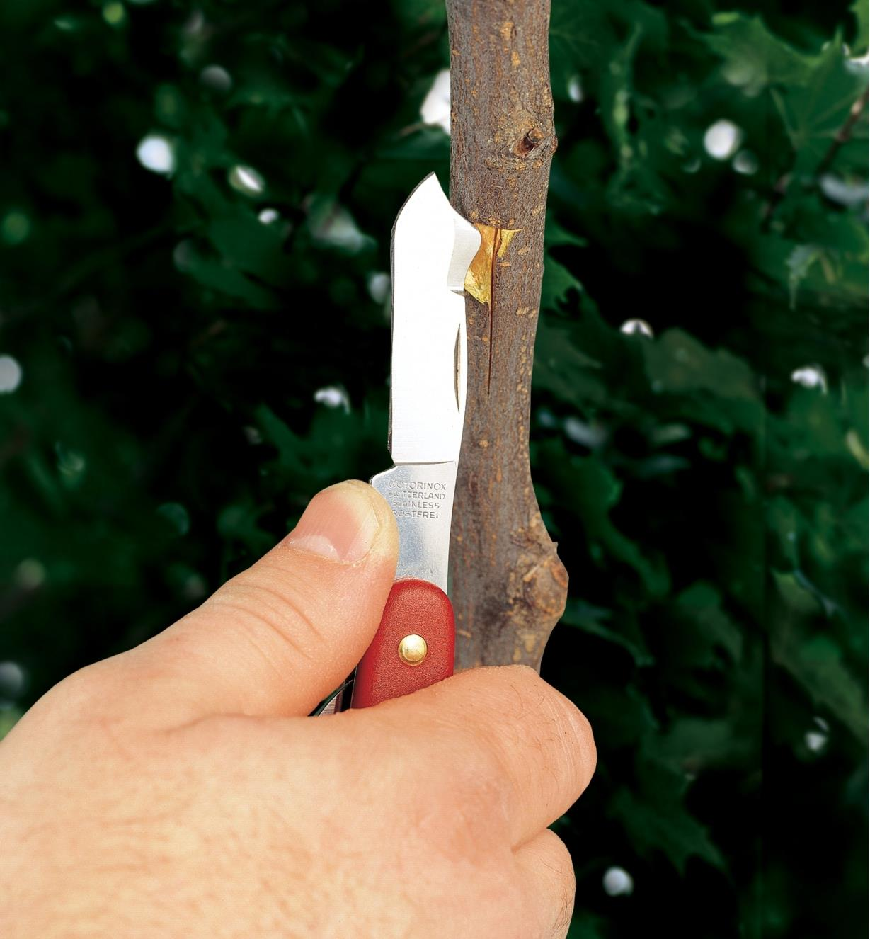 BL130 - Budding and Grafting Knife