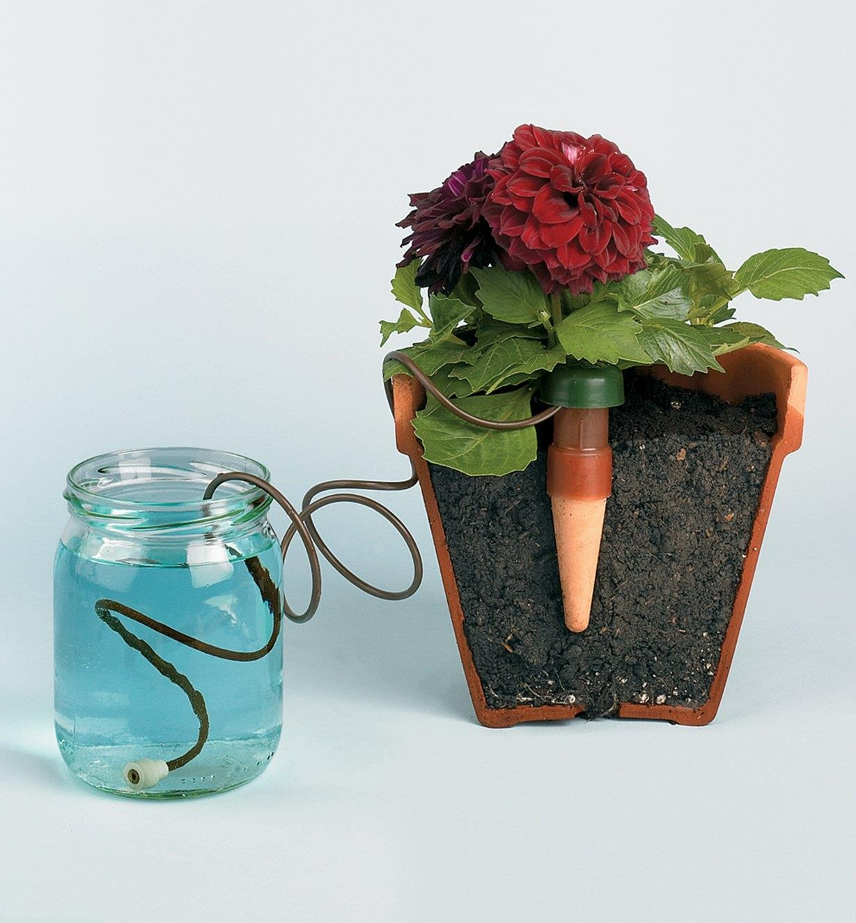 Cutaway view of an automatic Plant Waterer inserted in a plant pot with hose placed in a jar of water