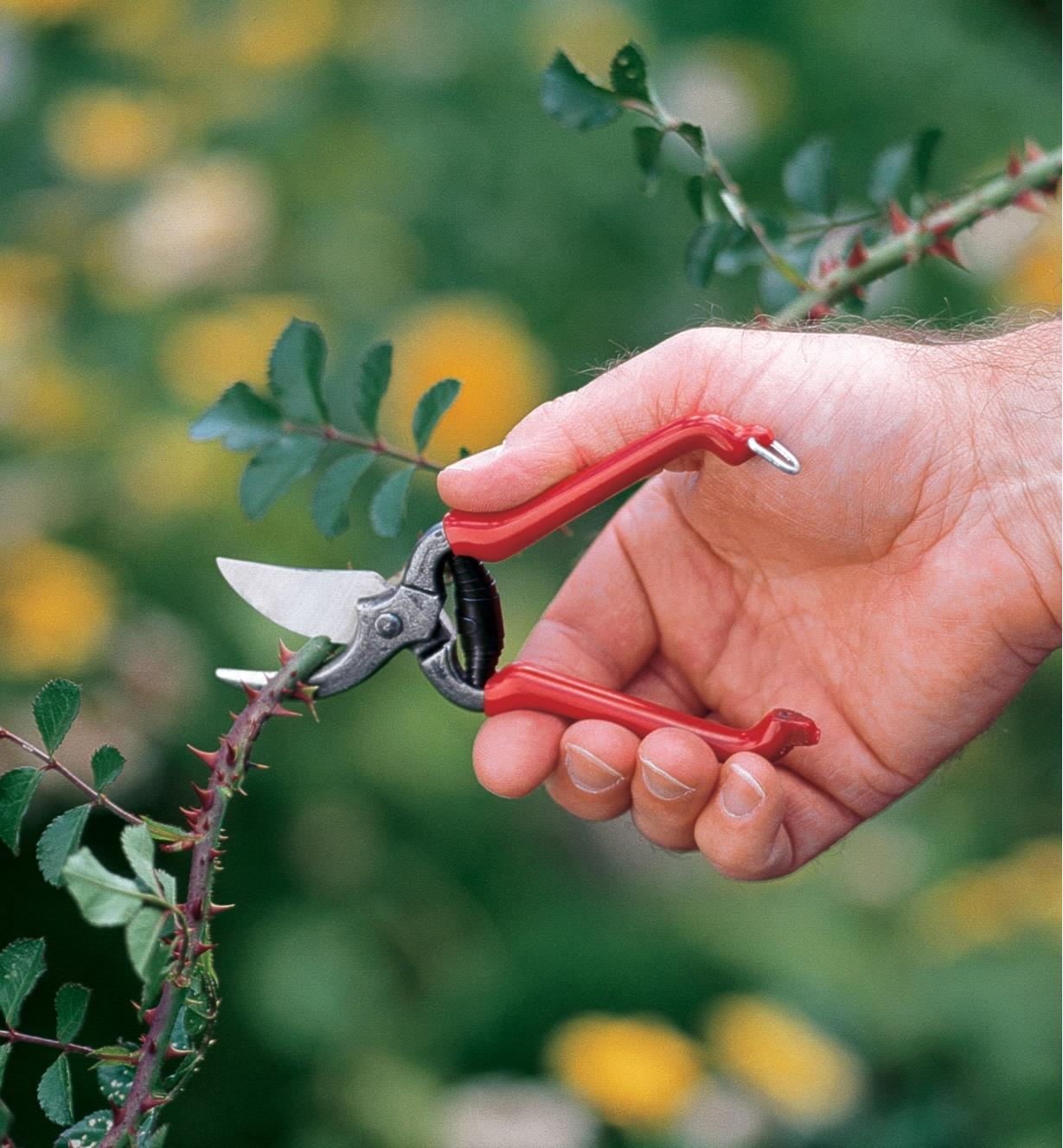 Forged Pocket Pruner being used to prune a rosebush