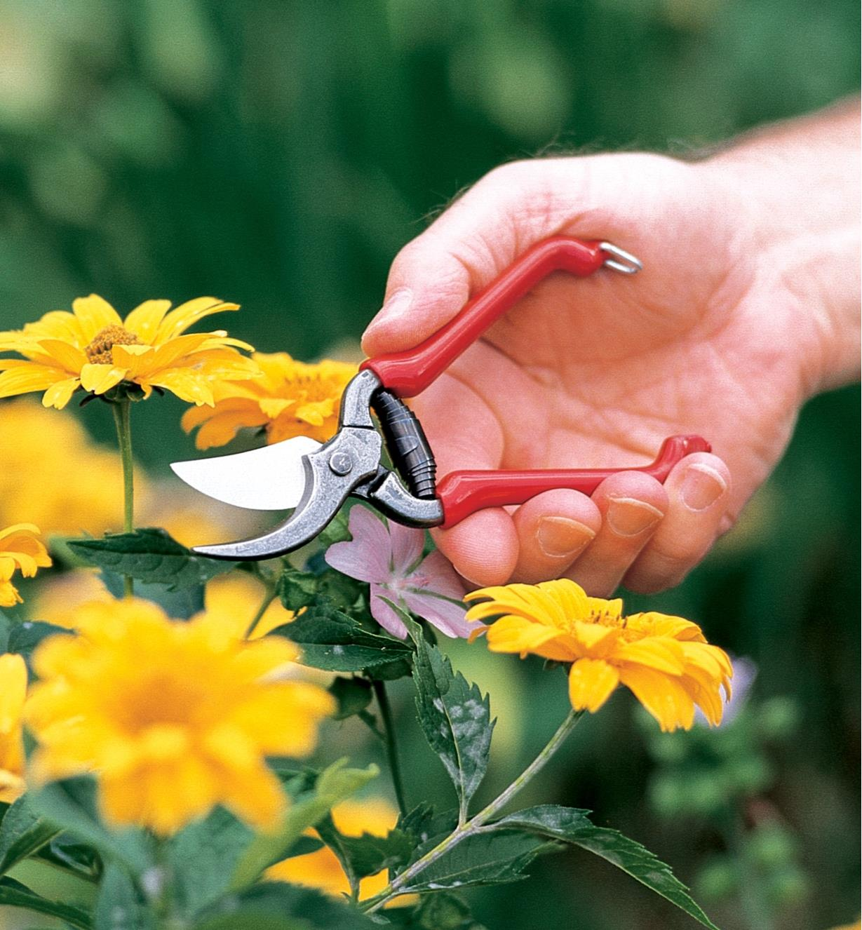 Forged Pocket Pruner being held above yellow flowers