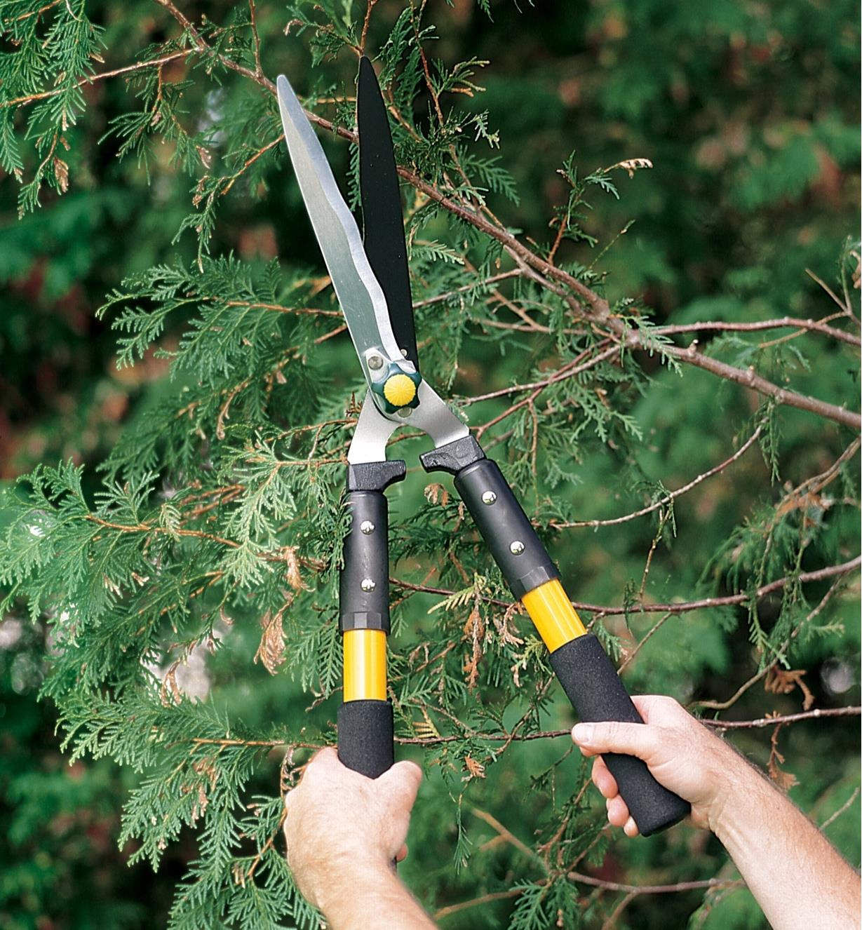 Using Standard Hedge Shears to trim a hedge