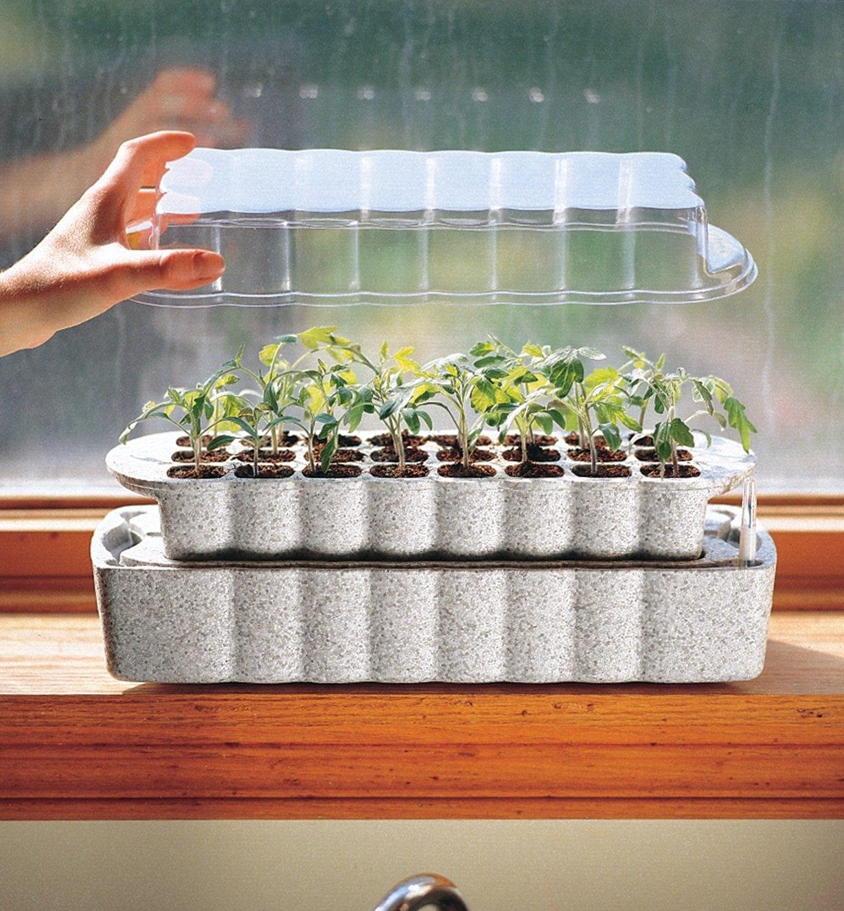 Windowsill Seed Starter with cover removed, showing seedlings inside