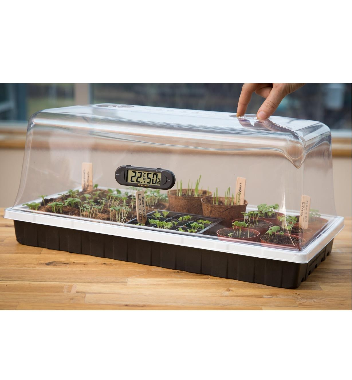 Dome and tray shown with plants and mini hygrometer/thermometer, sold separately.