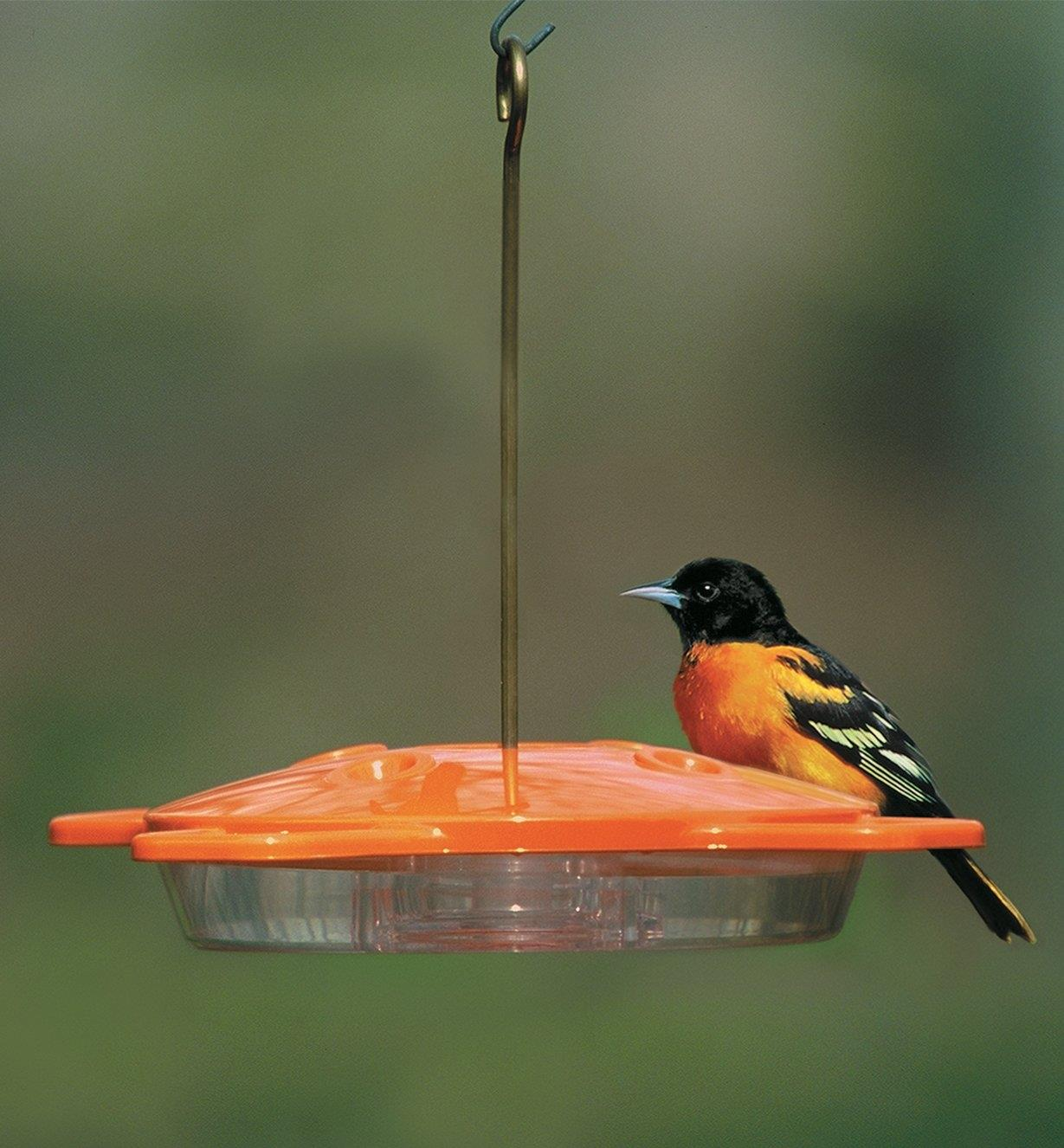 An oriole perches on an Oriole Feeder hanging in a yard