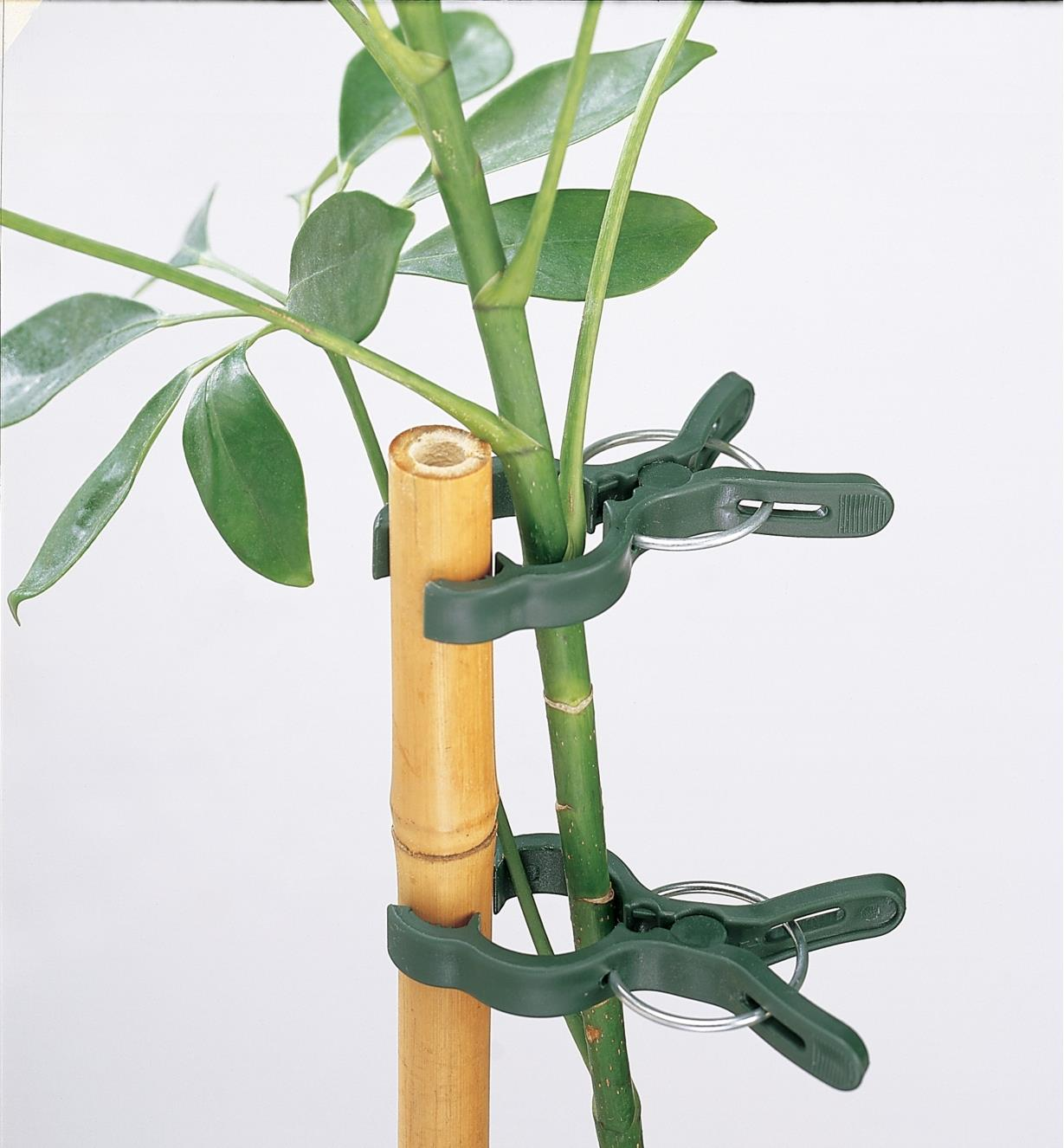 Two plant clips holding a plant stem to a bamboo stake