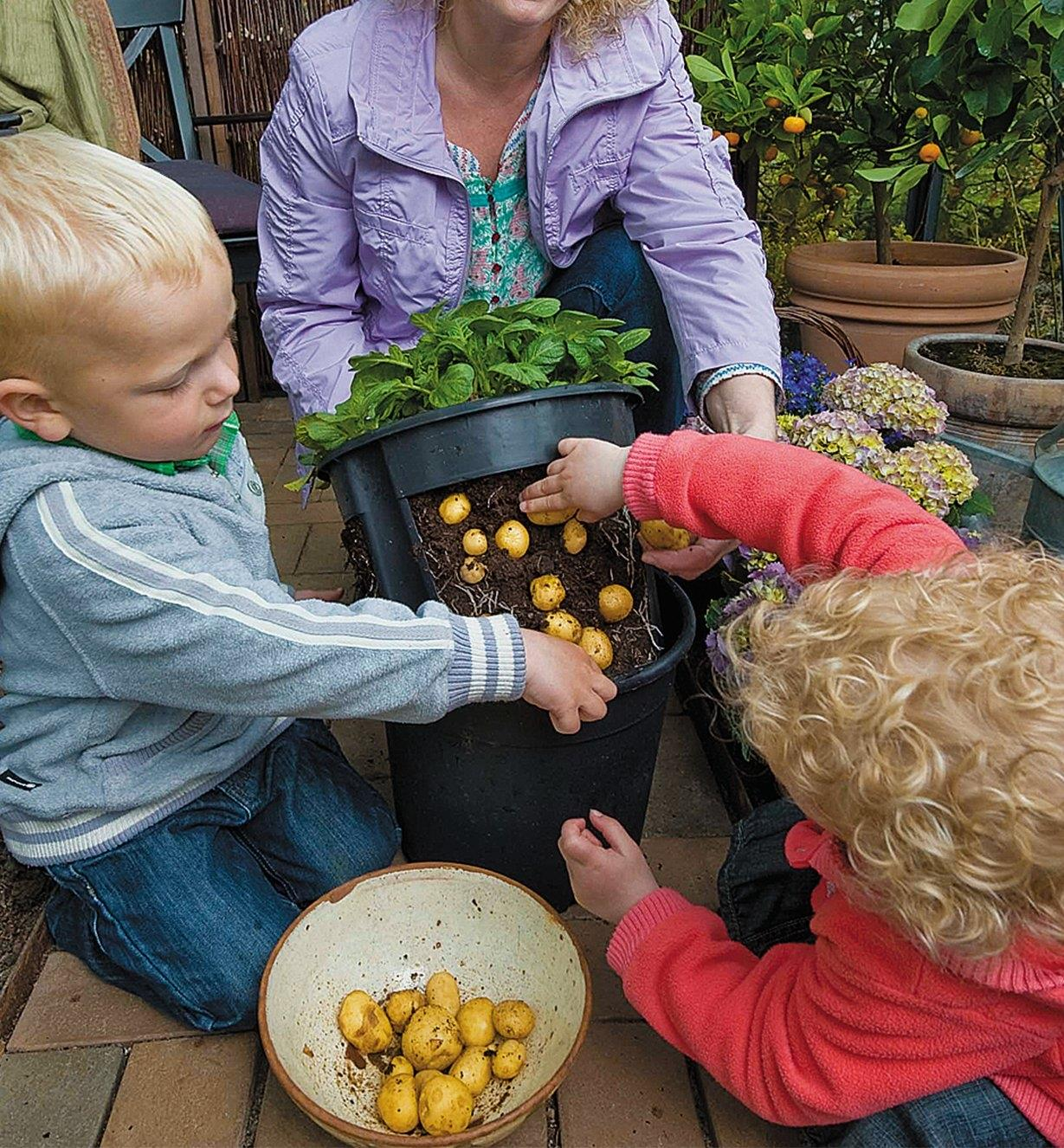 A woman and two children harvest potatoes from the Potato Pot