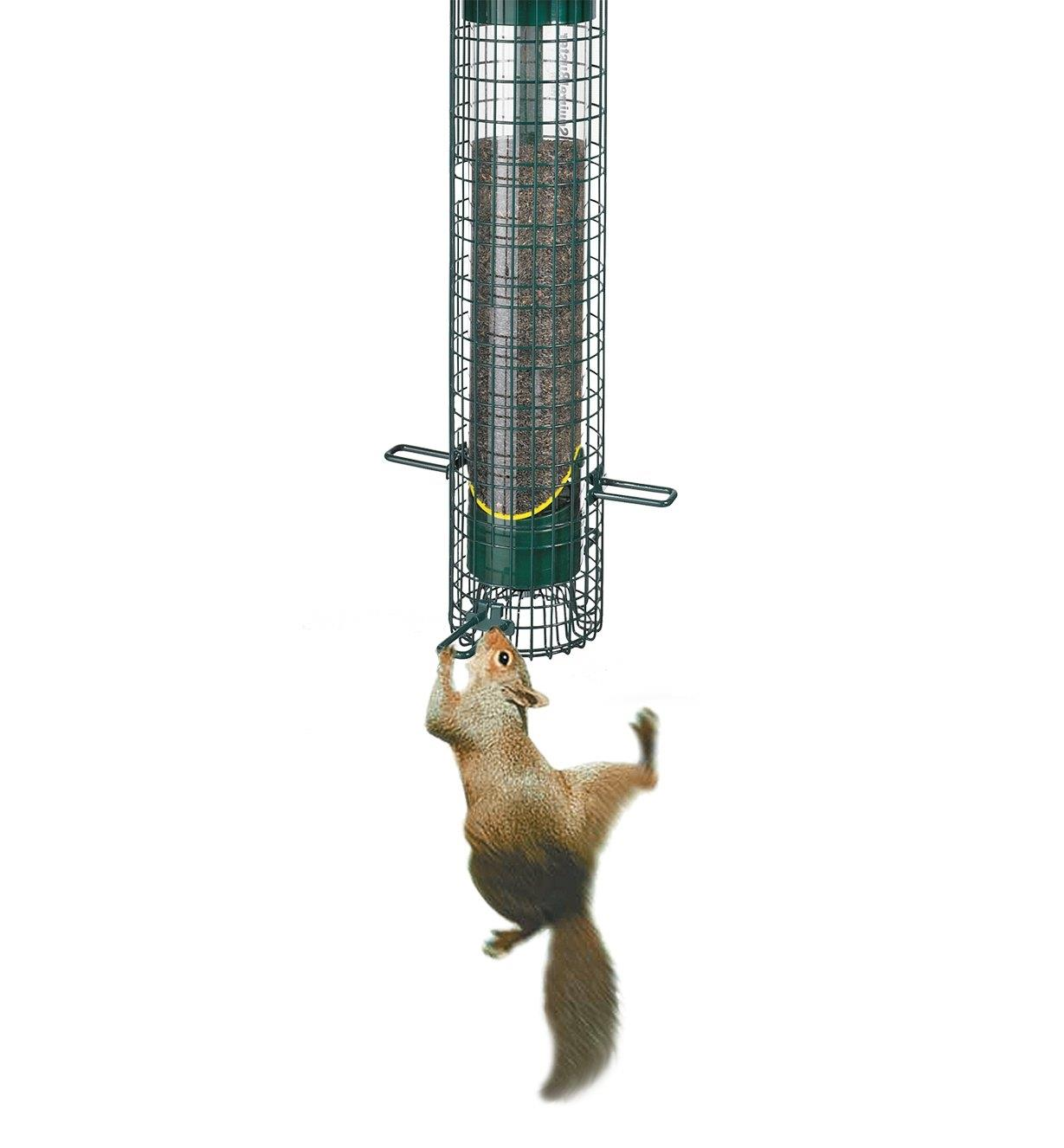 AG308 - Squirrel Buster Finch  Feeder