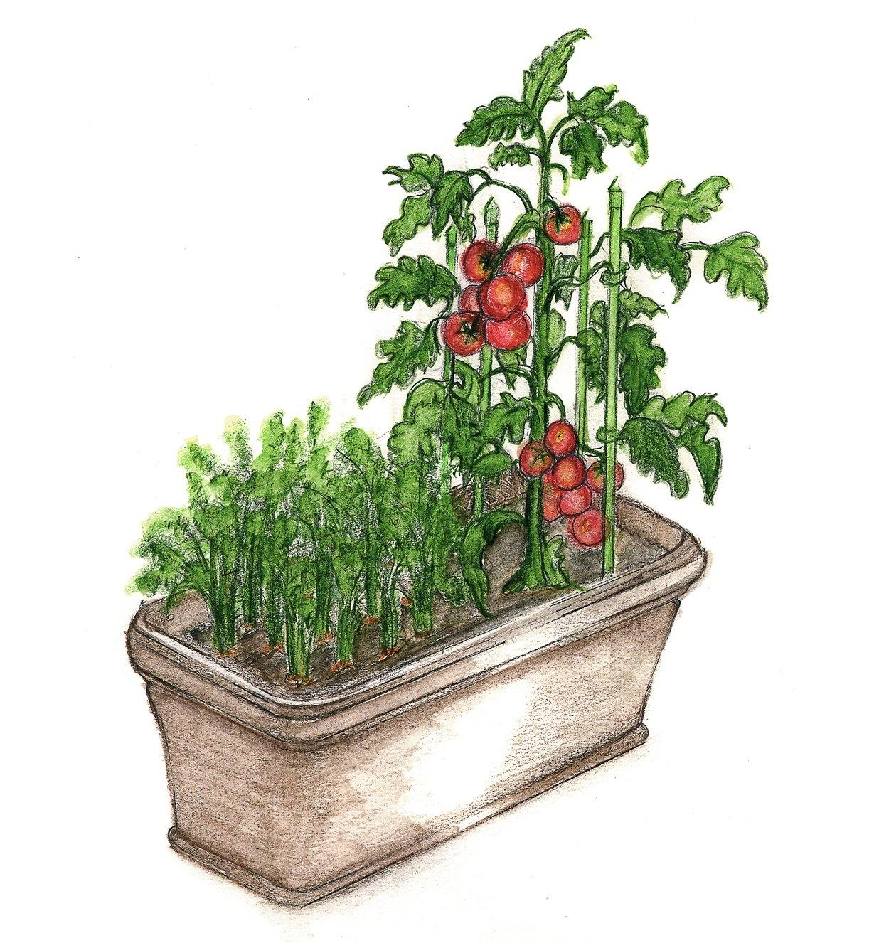 Illustration shows tomatoes and herbs growing in a self-watering planter