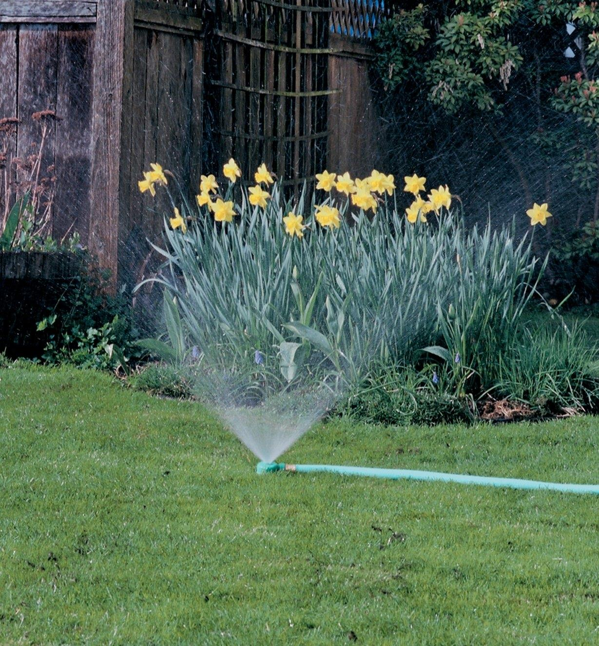 Spot Sprinkler being used to water daffodils