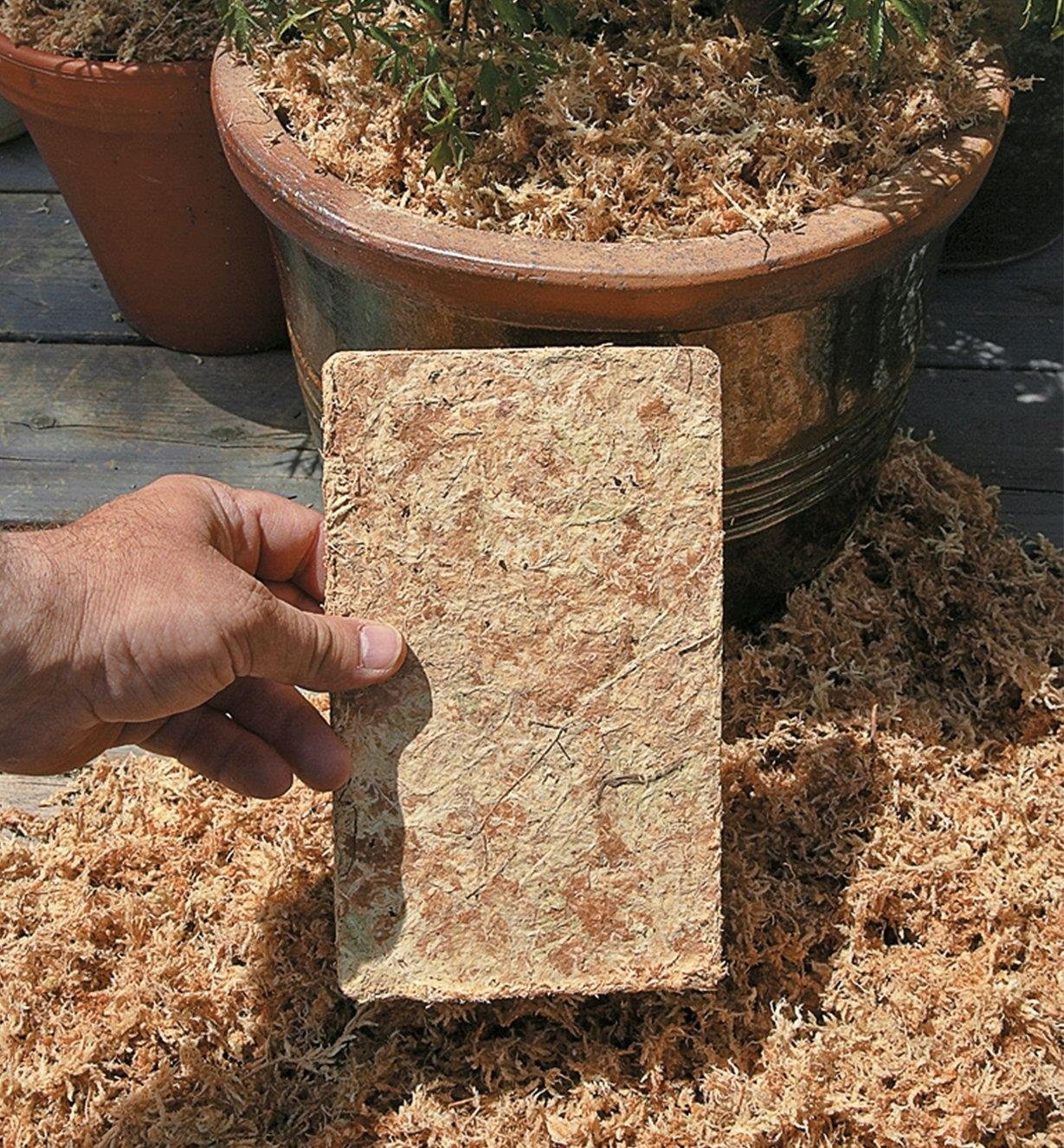 Compressed Sphagnum Moss packet in front of a planter filled with expanded moss
