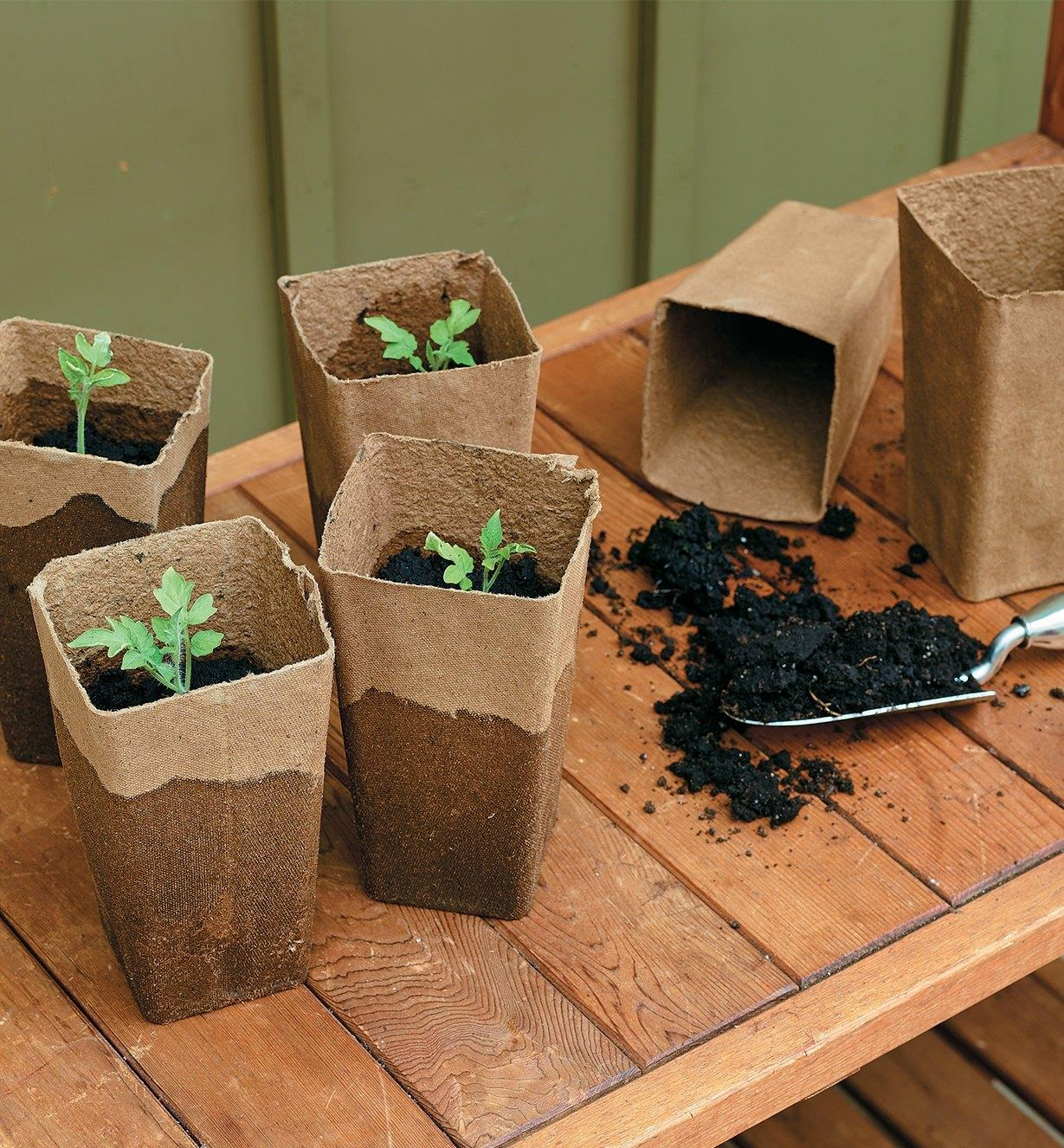 Fiber pots planted with seedlings