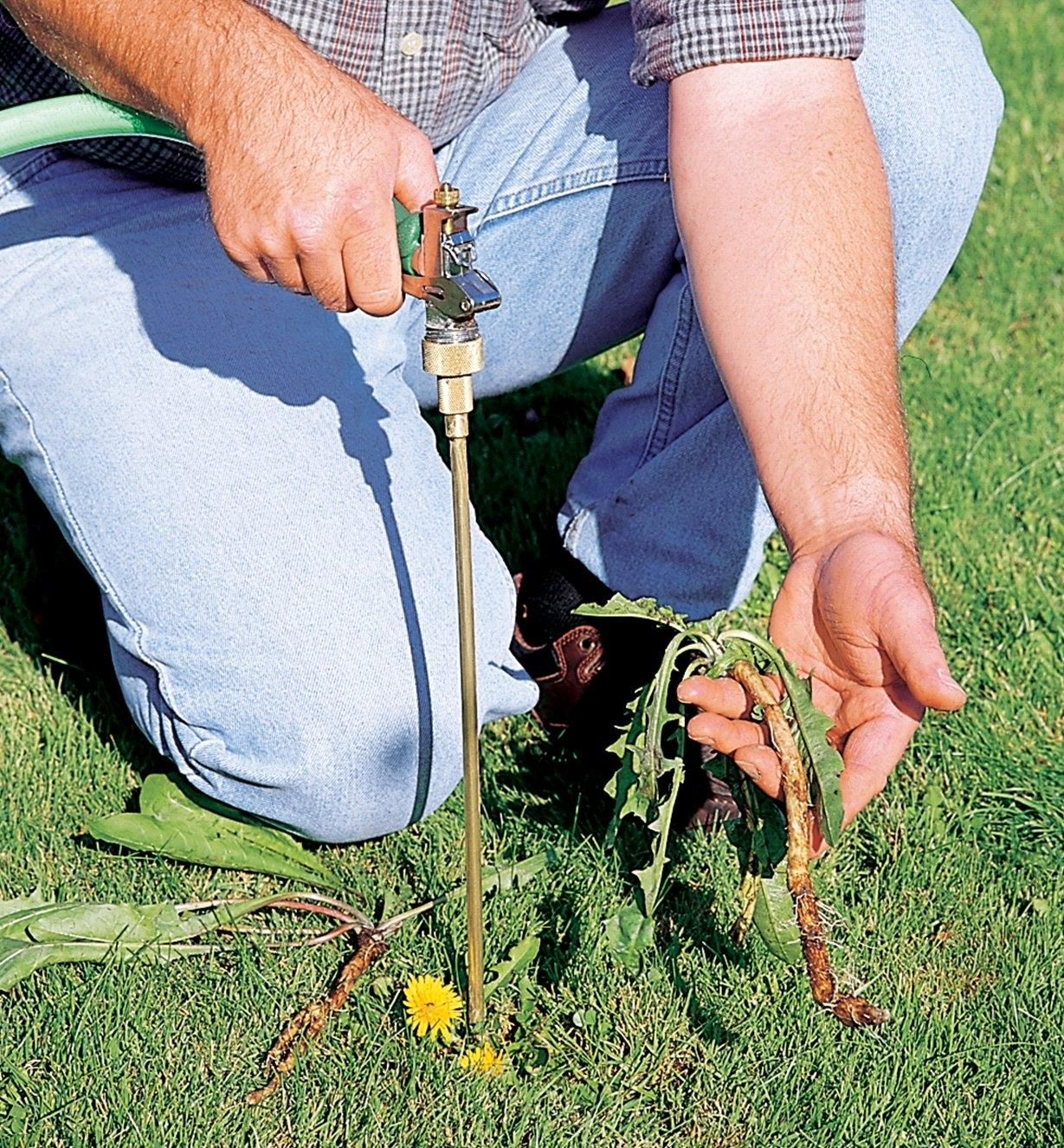 A man kneeling on a lawn holds the water-powered weeder and a dandelion he has removed with root intact