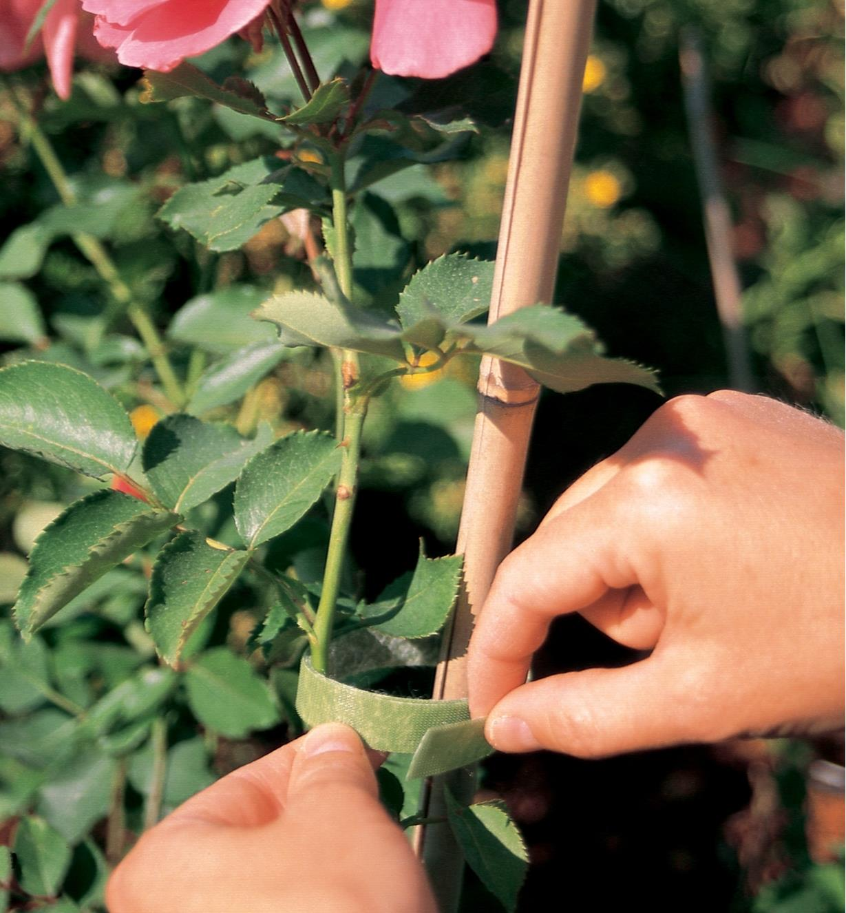 VELCRO Brand Plant Tie holds a rose stem to a stake