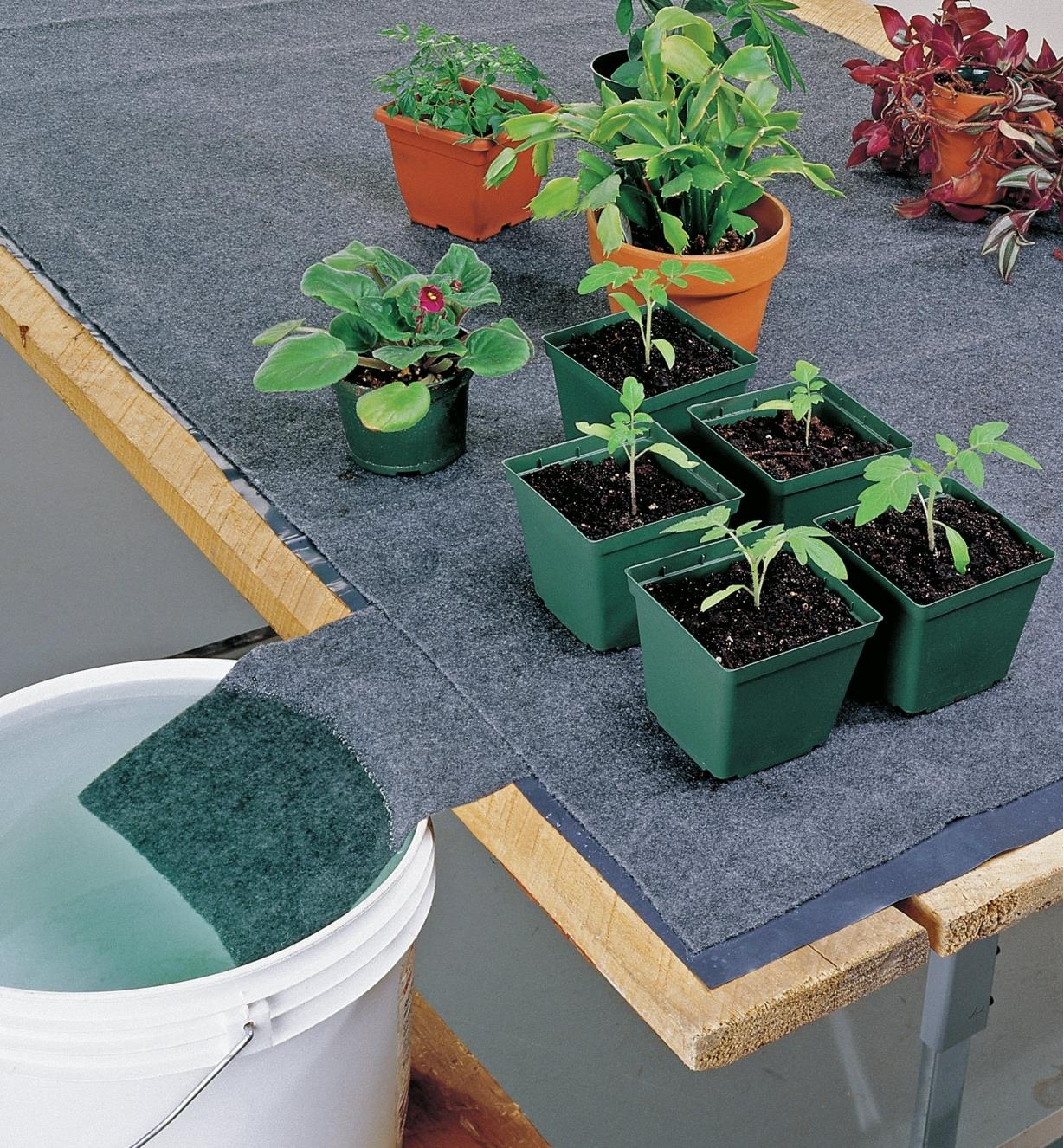 Various potted plants sit on a watering mat that is absorbing water from a bucket