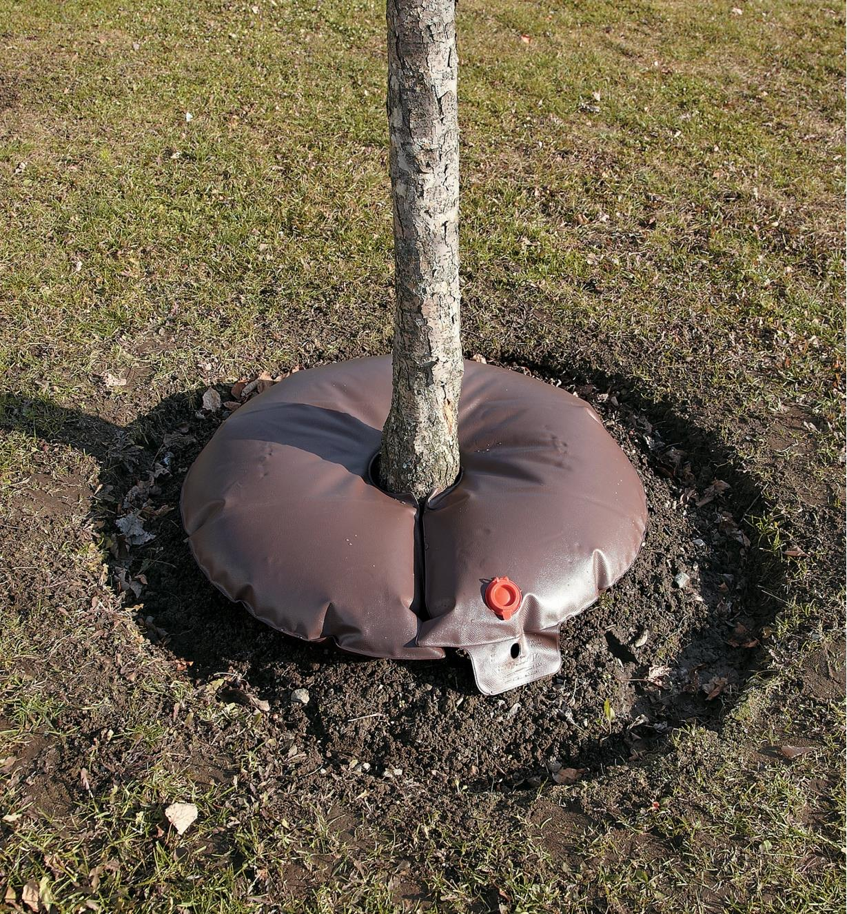 Tree Irrigator placed around the base of a young tree