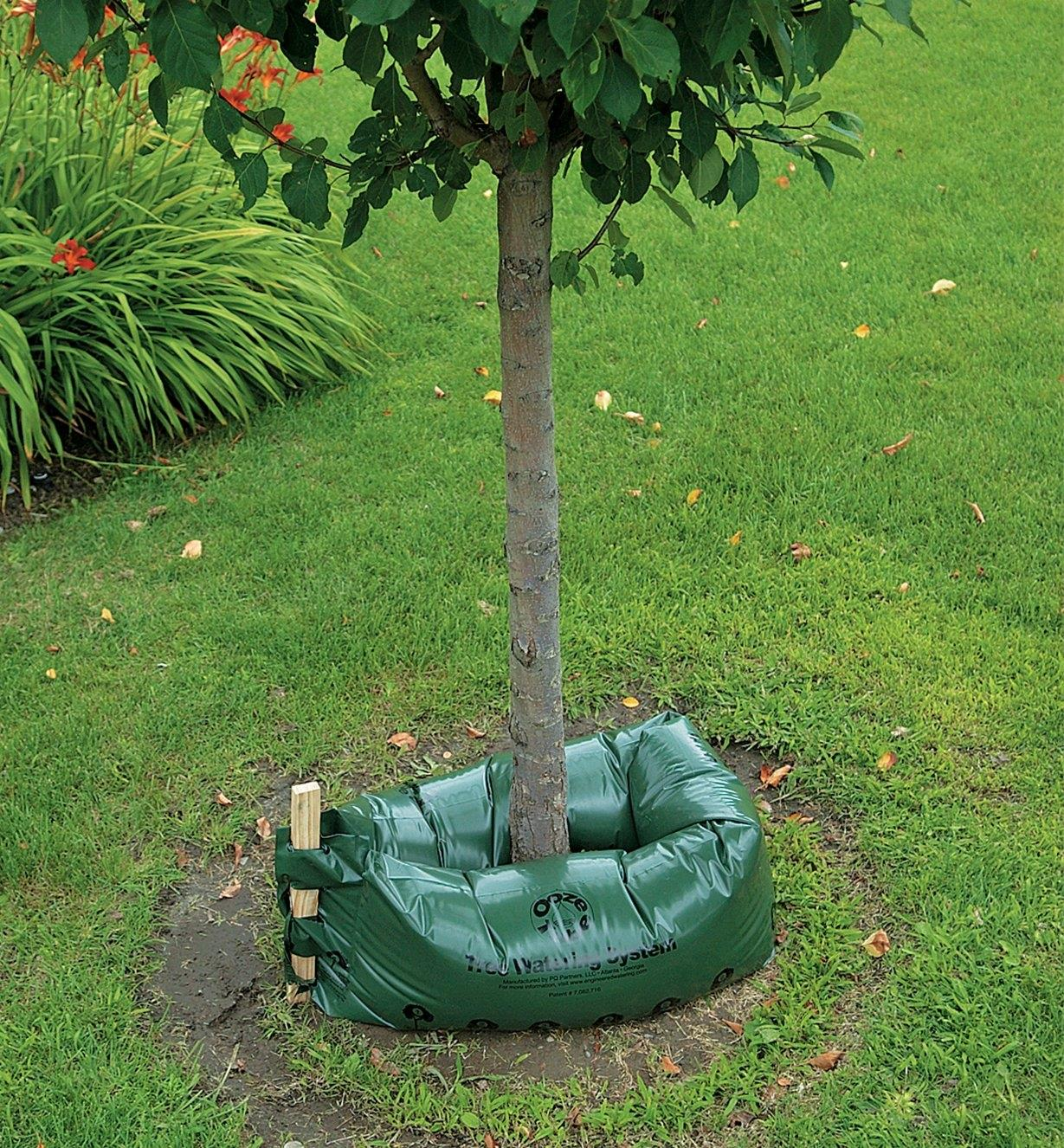 Tree Drip Irrigation System positioned around a young tree and filled with water