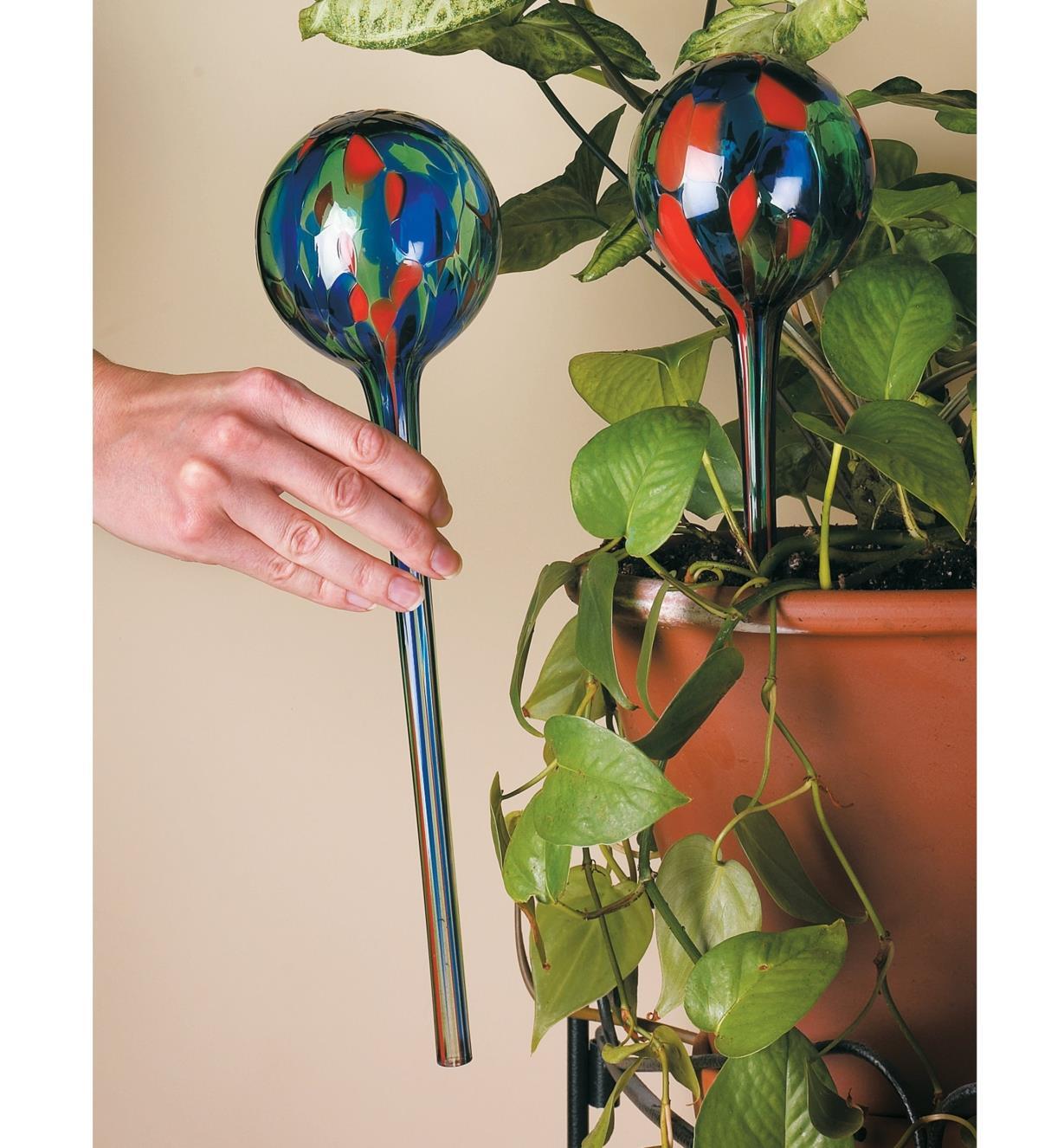 XC479 - Watering Bulb