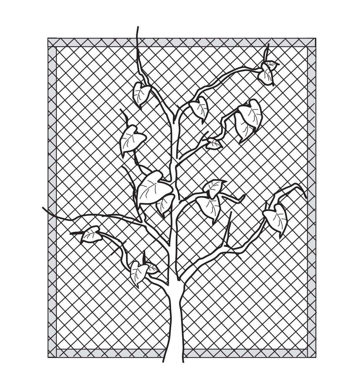 Illustrated example of a flat trellis against a wall, made with Garden Netting