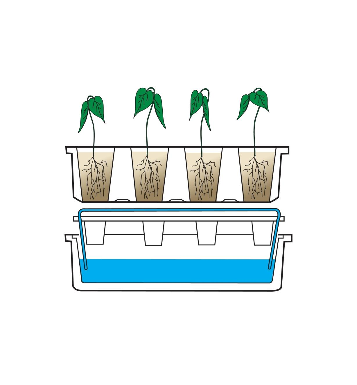Diagram demonstrating how the capillary mat is draped over the reservoir with the mat ends in the water, and the seed tray is placed on the mat