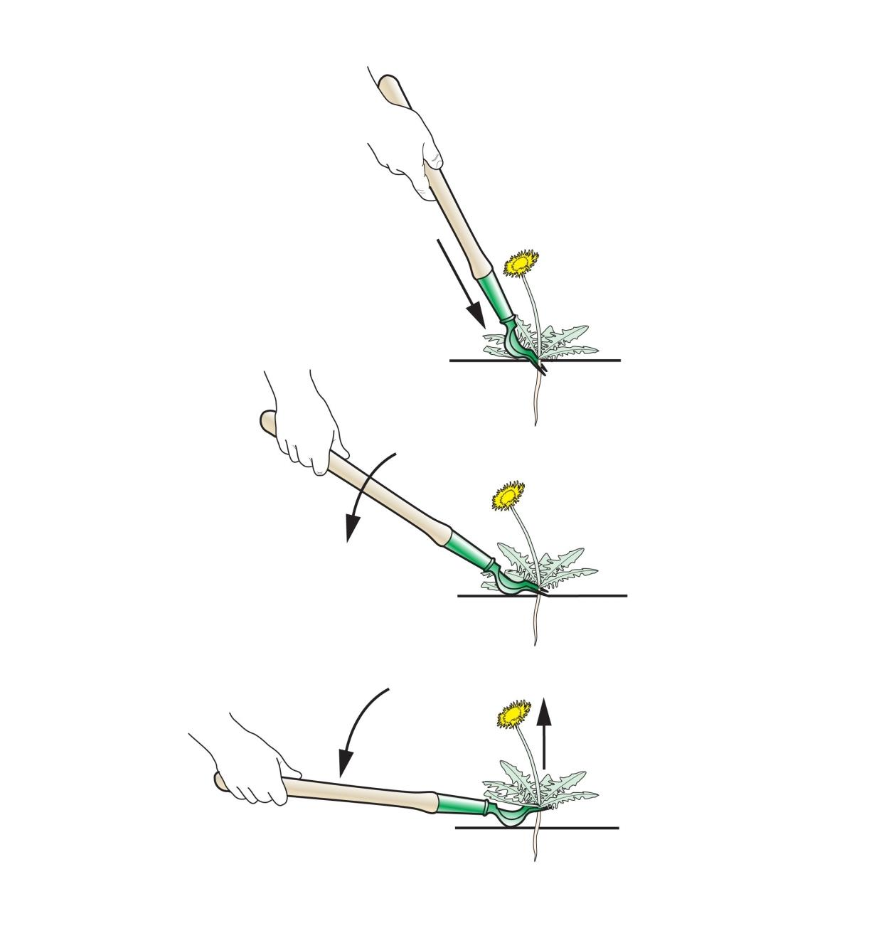 A series of three illustrations shows the action of levering a dandelion out of the ground with the short dandelion digger