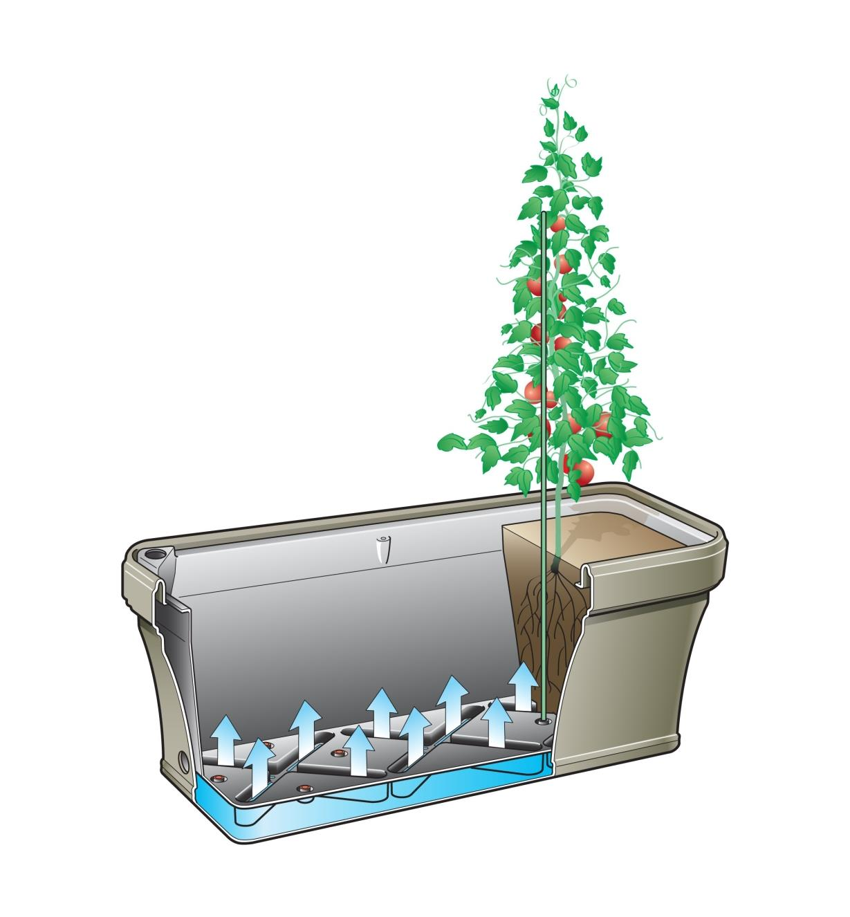 Cutaway illustration shows how water wicks from the reservoir into the soil