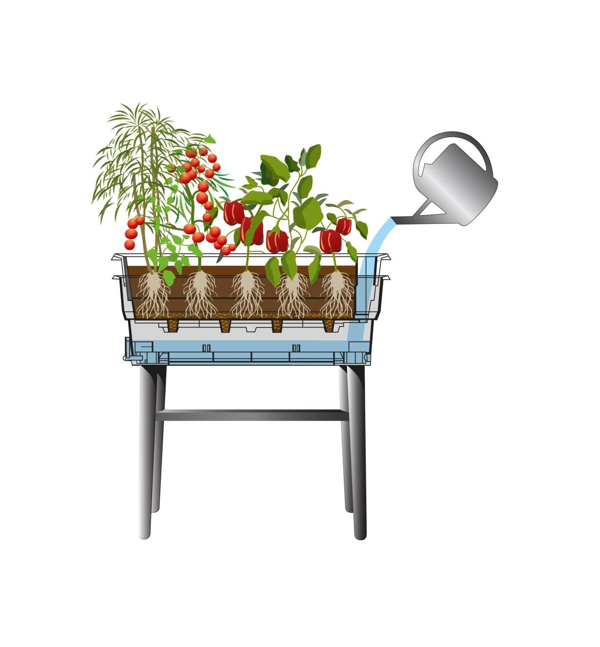 Illustration montrant le remplissage du réservoir du bac de culture à réservoir intégré sur pieds