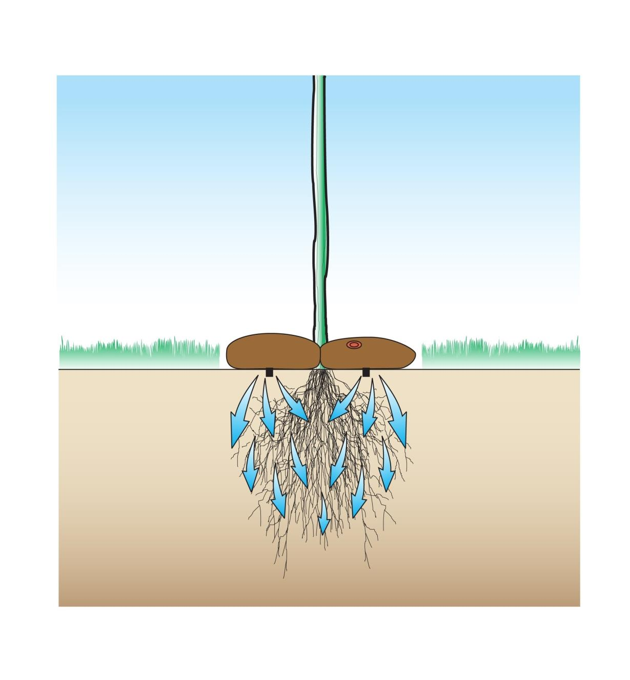 Cutaway illustration of tree roots being watered by the Tree Irrigator