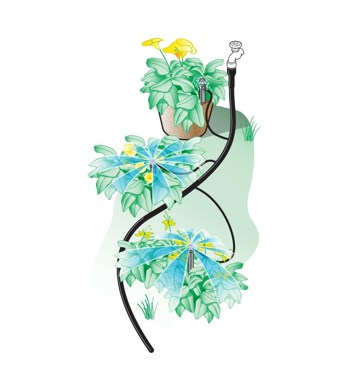 Illustration d'un système d'irrigation Shrubbler installé de manière à arroser des plantes en pleine terre et en pot