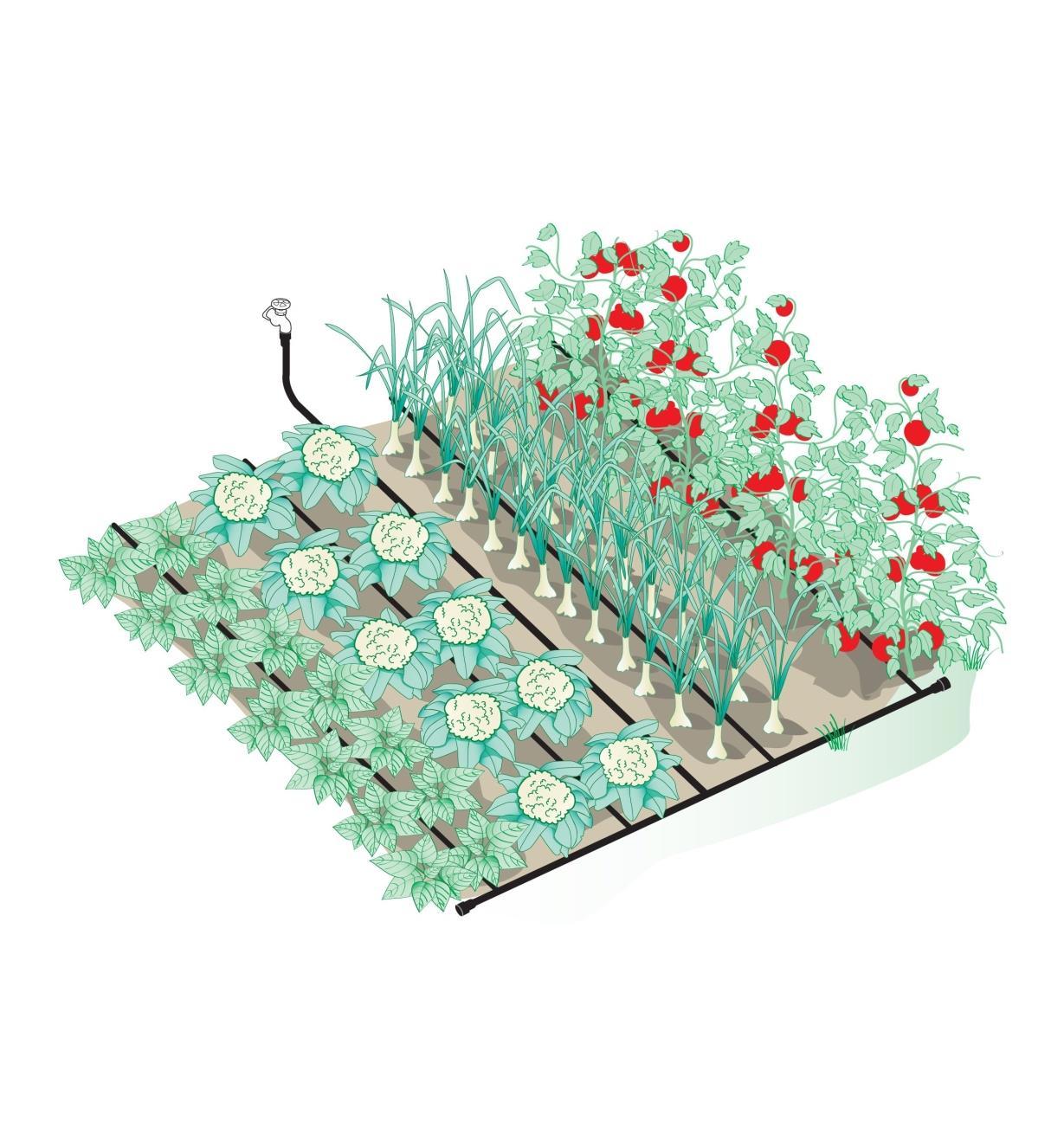XC355 - Système d'irrigation par boyau suintant de 100 pi
