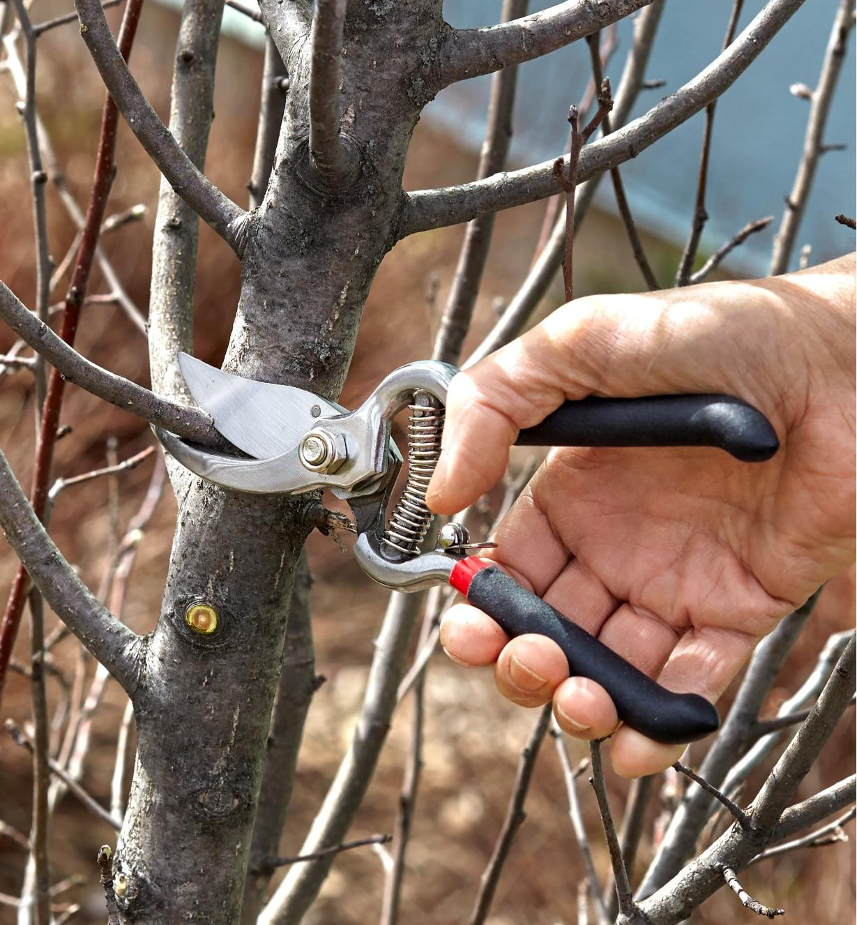 Bypass pruner being used to prune a small branch