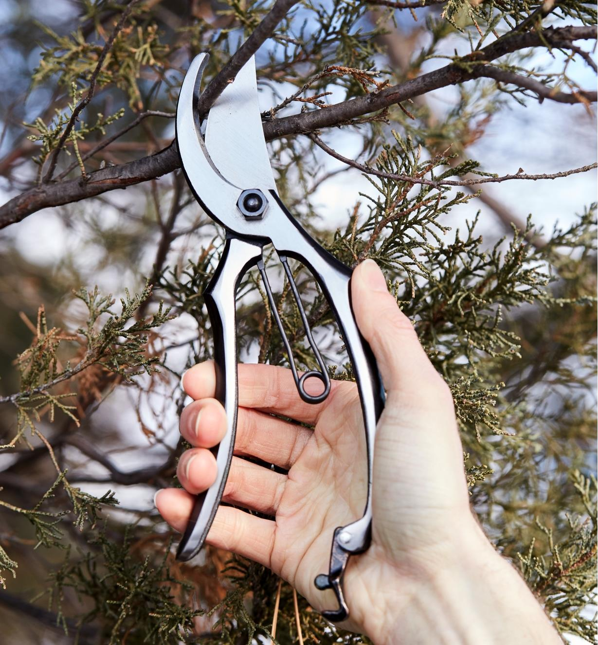 Using the all-steel bypass pruner to clip twigs off a tree branch