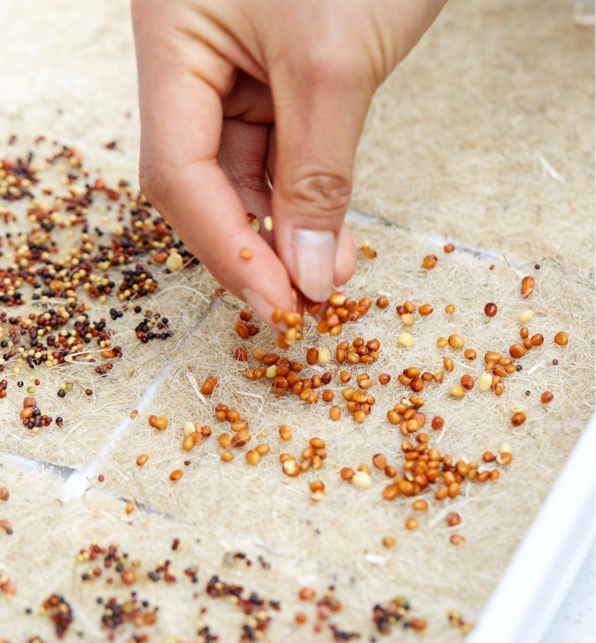 A hand placing seeds on a hemp-fibre grow mat