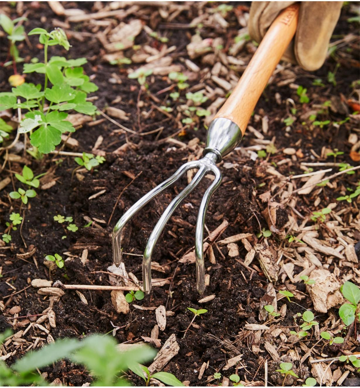 Weeding in a garden with the Mid-Length Three-Prong Cultivator