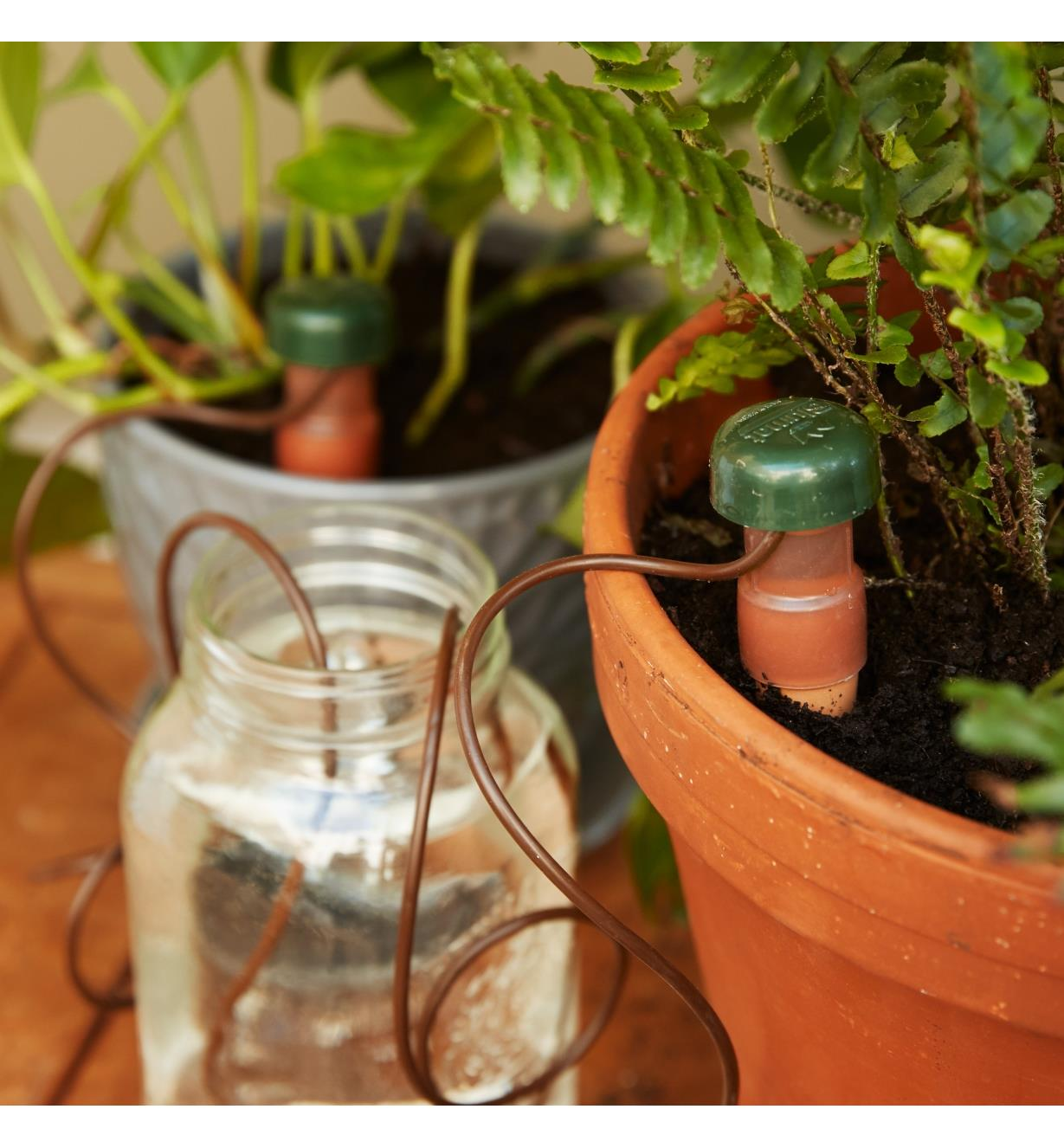 Automatic Plant Waterers inserted in two plant pots with hoses placed in a jar of water