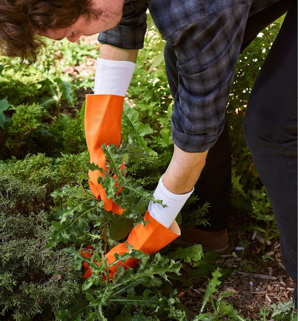 A gardener wearing glove liners under rubber gloves while pulling weeds