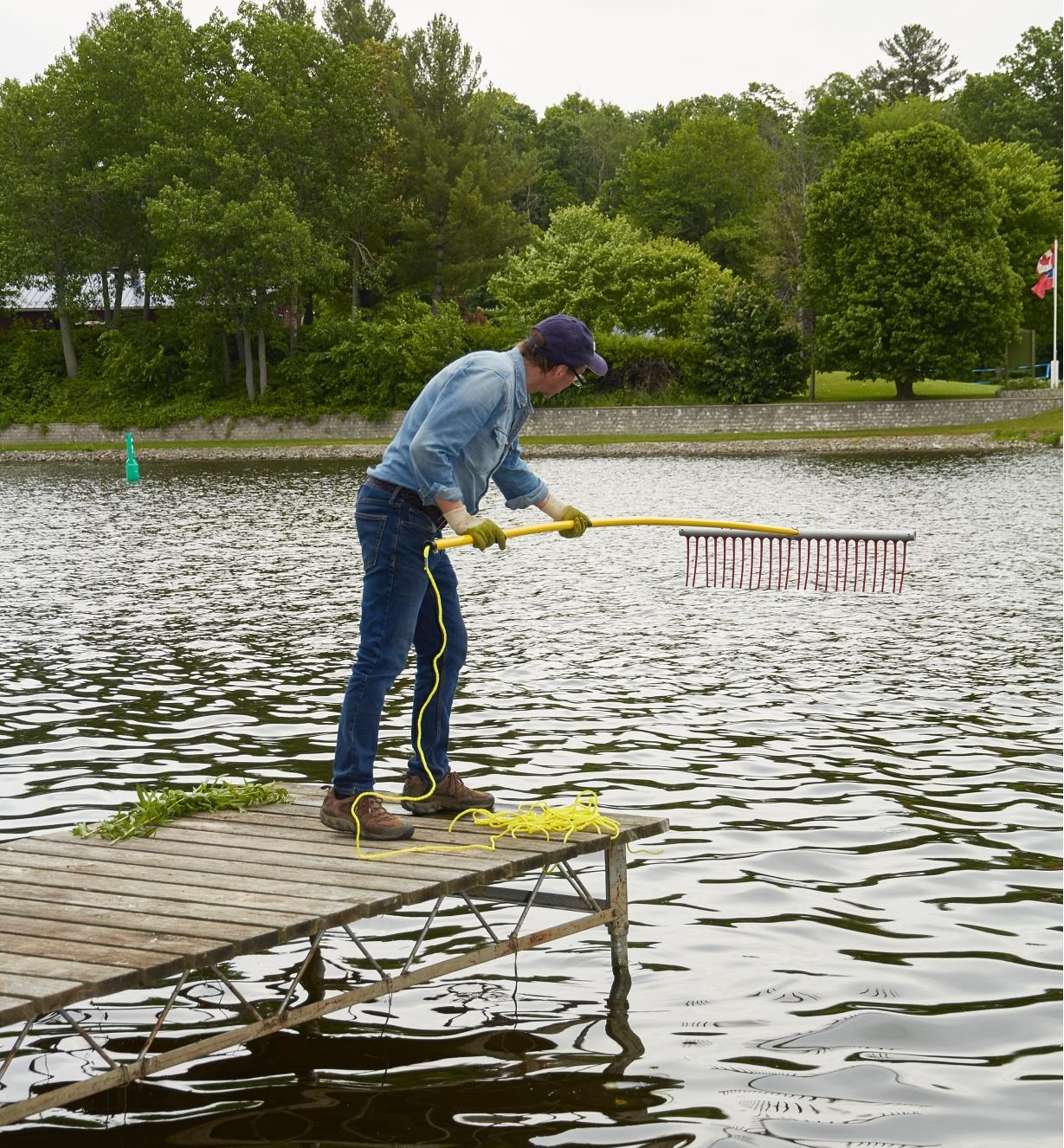 A man standing at the end of a dock rakes weeds from a pond