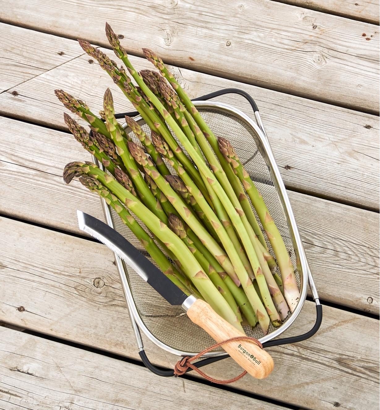 BL114 - Asparagus/Harvest Knife