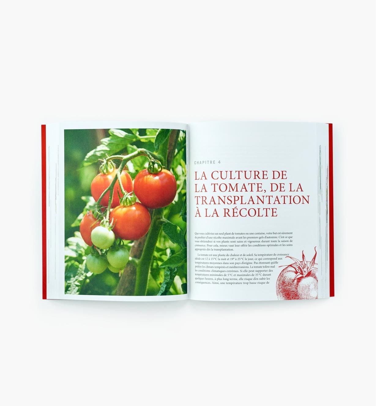 LD902 - La tomate De la terre a la table