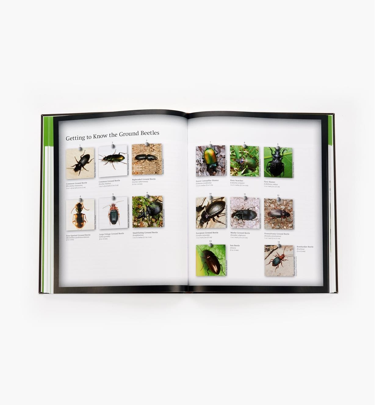 99W8380 - Good Garden Bugs
