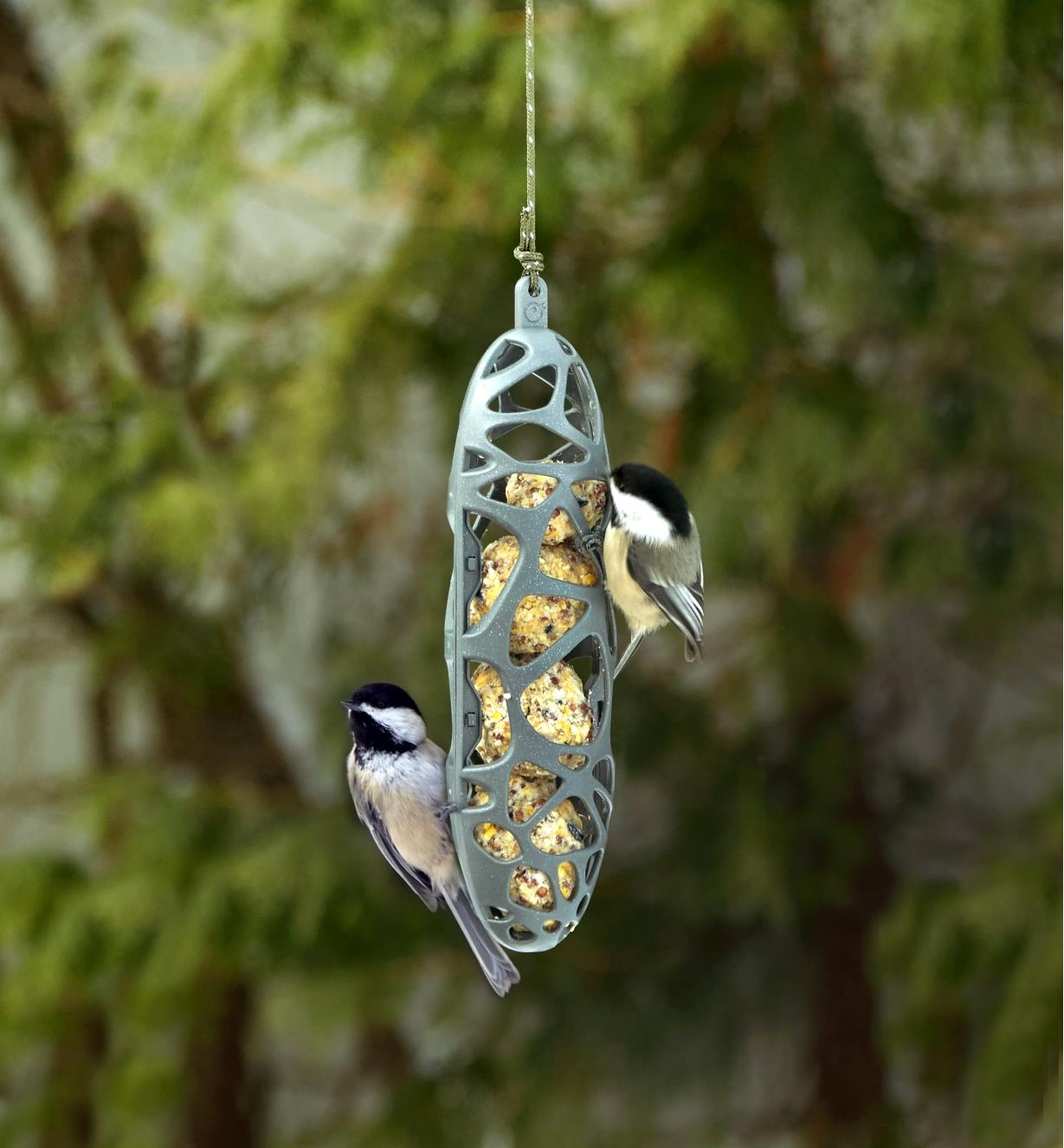 Two chickadees feed from the suet bird feeder hanging in a yard