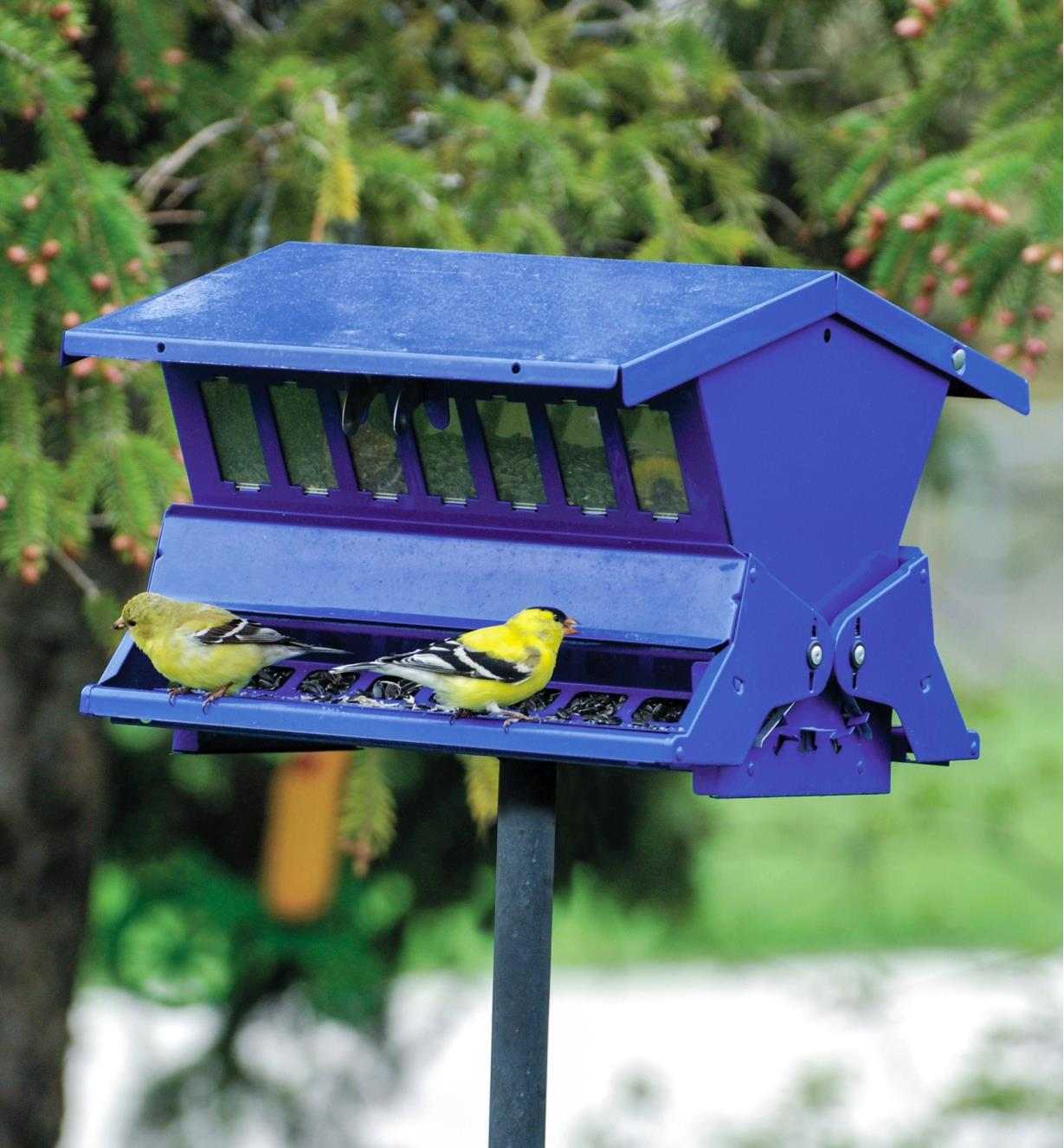 AG339 - Blue Feeder, Double Sided